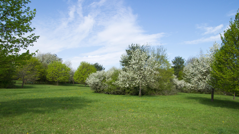 kostenlose foto landschaft baum gras himmel rasen wiese hgel blume frhling grn weide park hinterhof blau garten flora blumen strauch - Hinterhof Landschaften Bilder