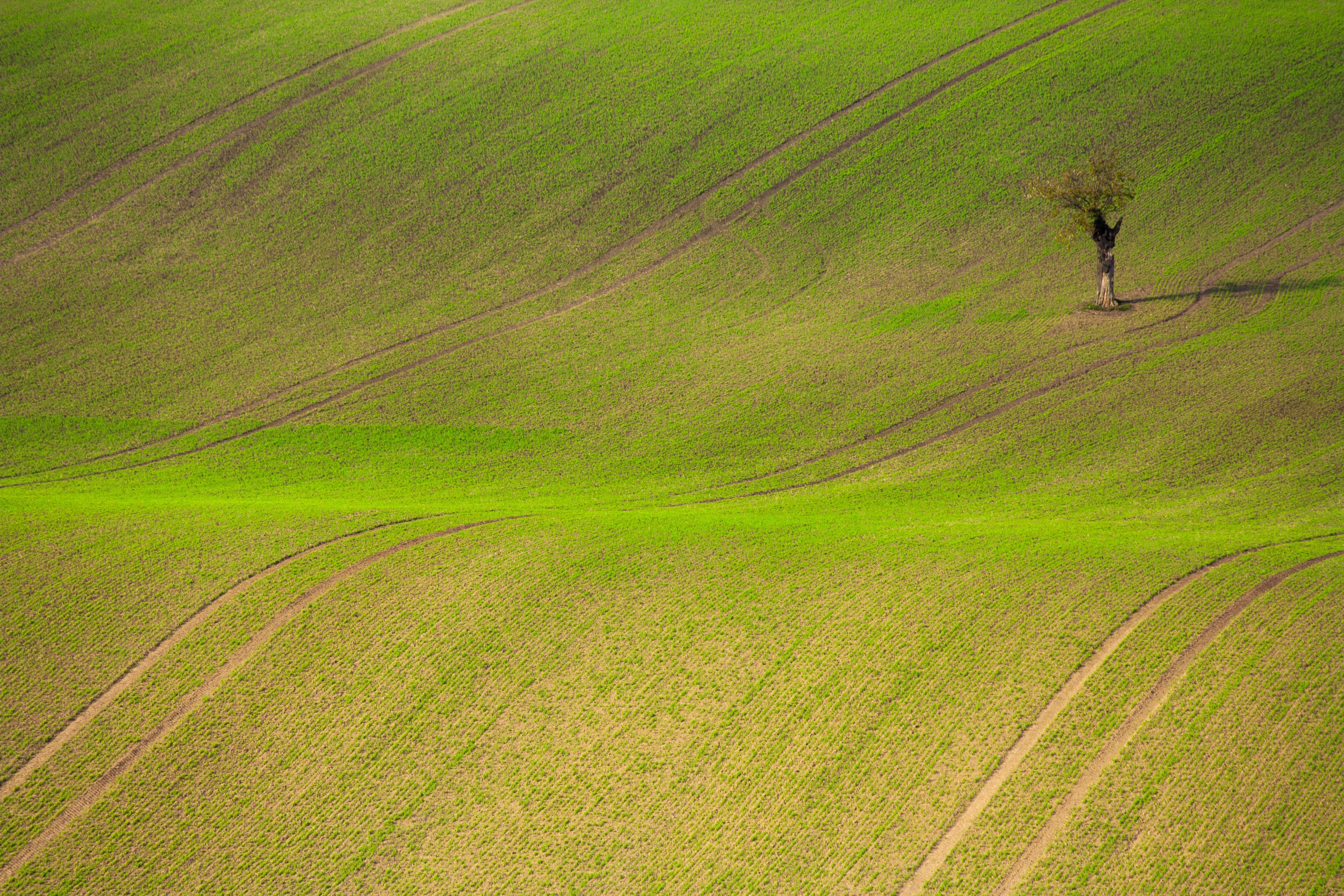 Free Images : Landscape, Tree, Sky, Farm, Lawn, Meadow