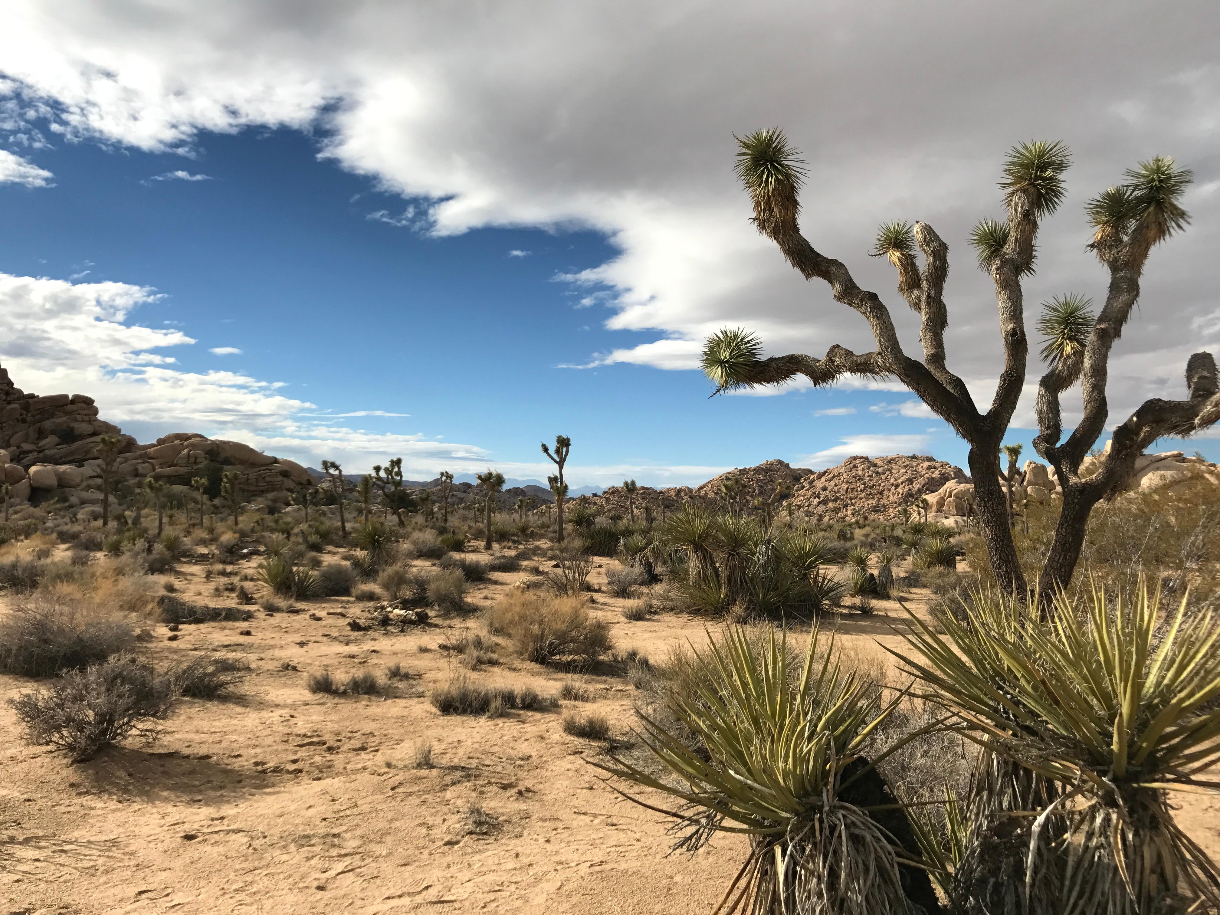 sahara desert plants - HD1200×900