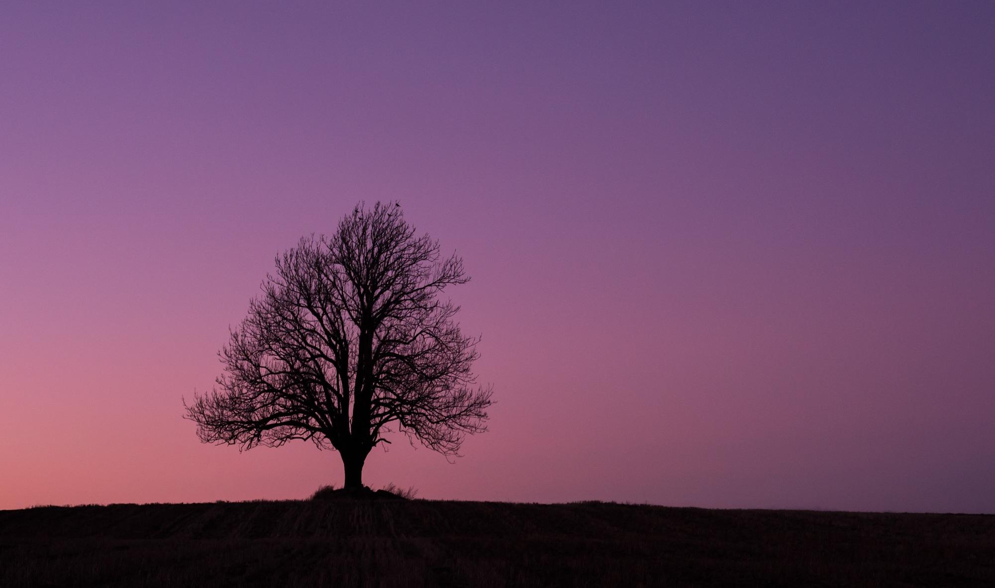 Images gratuites paysage arbre horizon branche for Agence horizon paysage