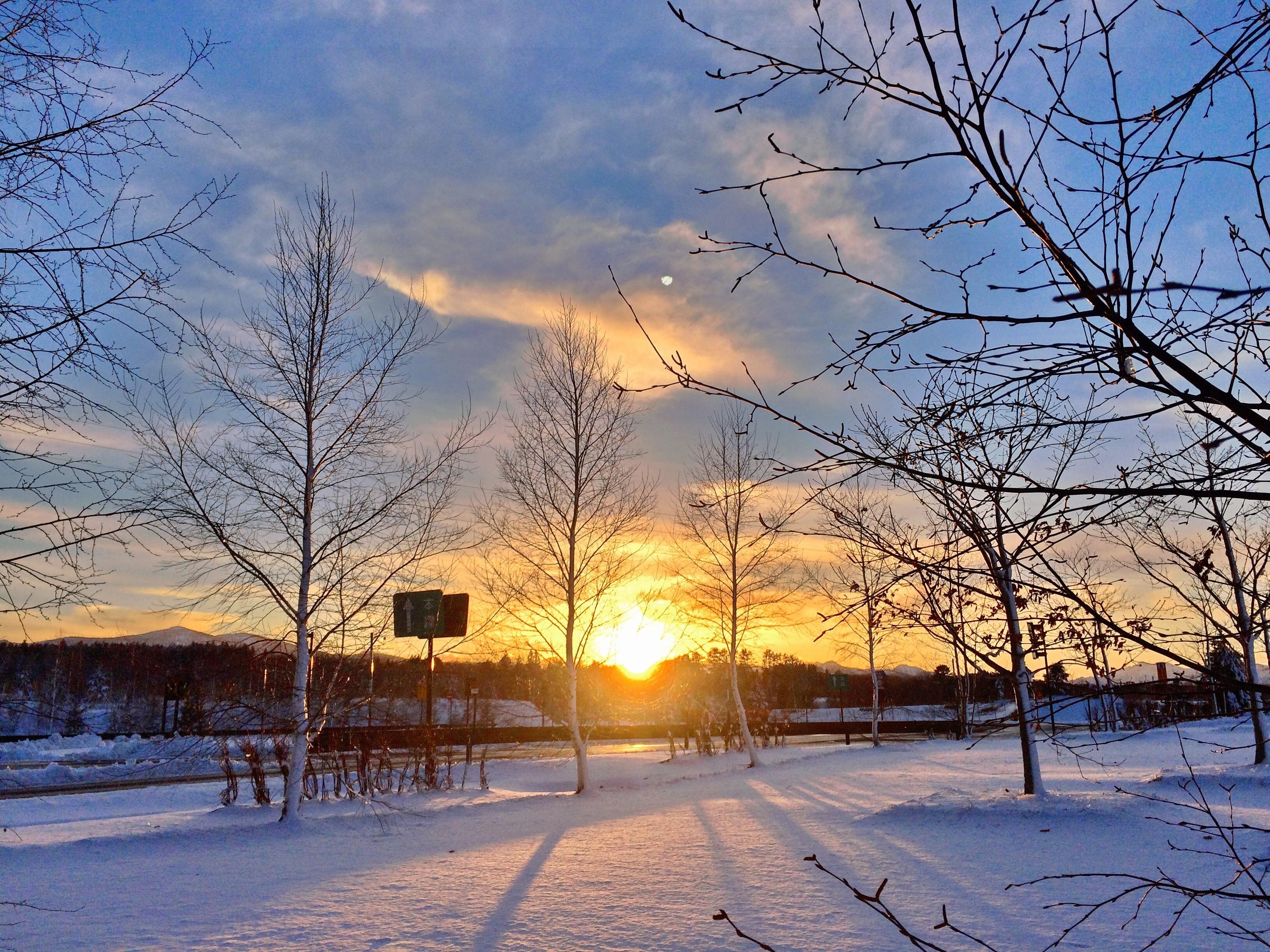 無料画像 風景 木 地平線 ブランチ 雪 冬 雲 空 日光