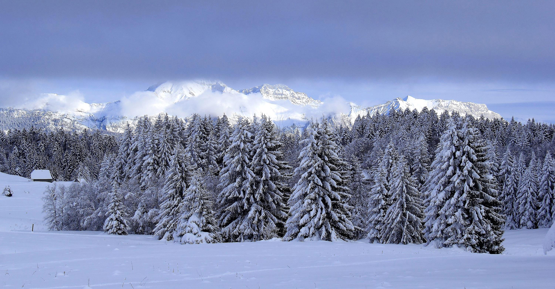 Images gratuites paysage arbre montagne neige hiver - Photos de neige gratuites ...