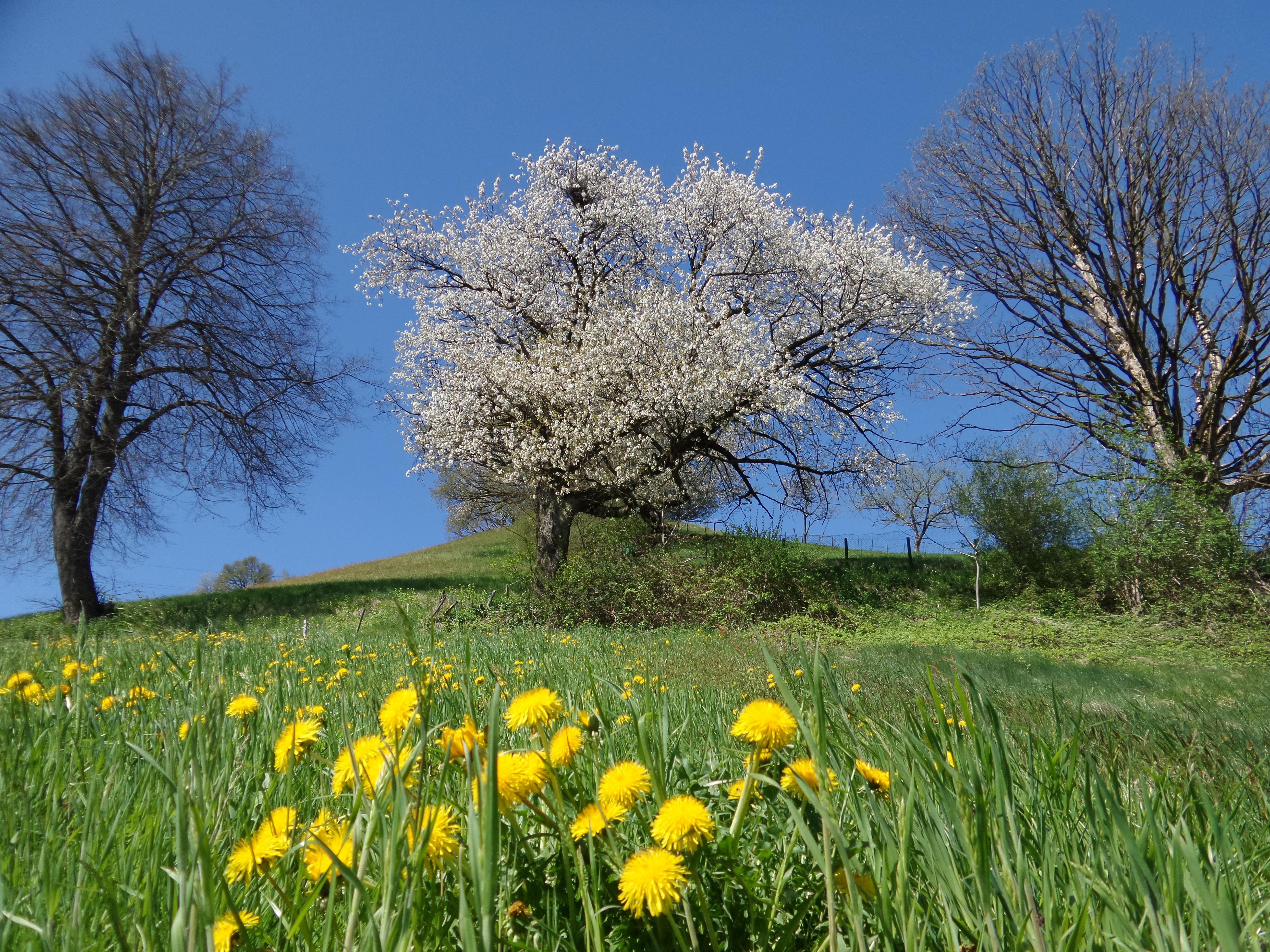 охлобыстина данный фото картинки пейзажи весна панорамных окнах немного