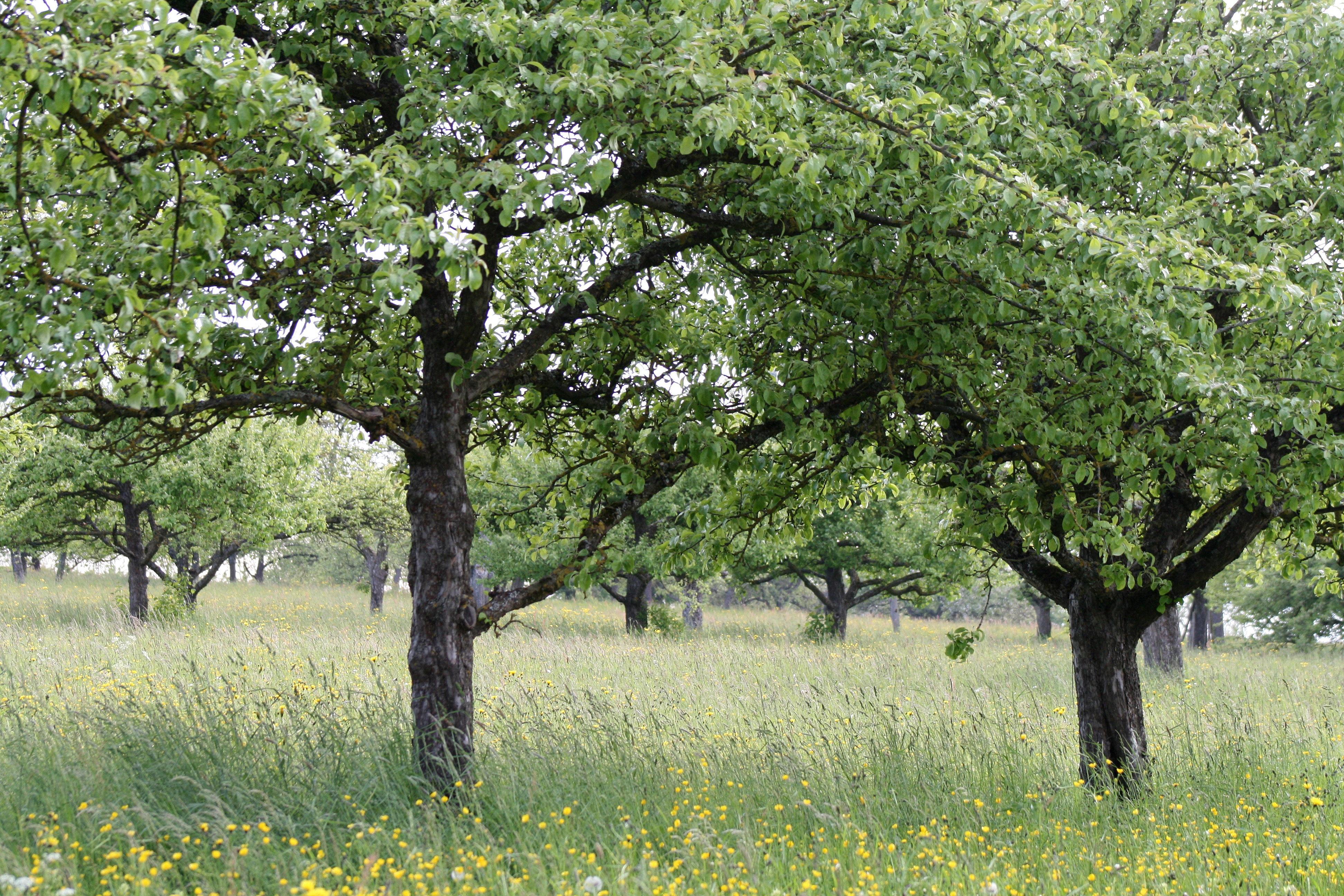 Alberi in fiore best albero di sofora con fiori with for Albero con fiori blu