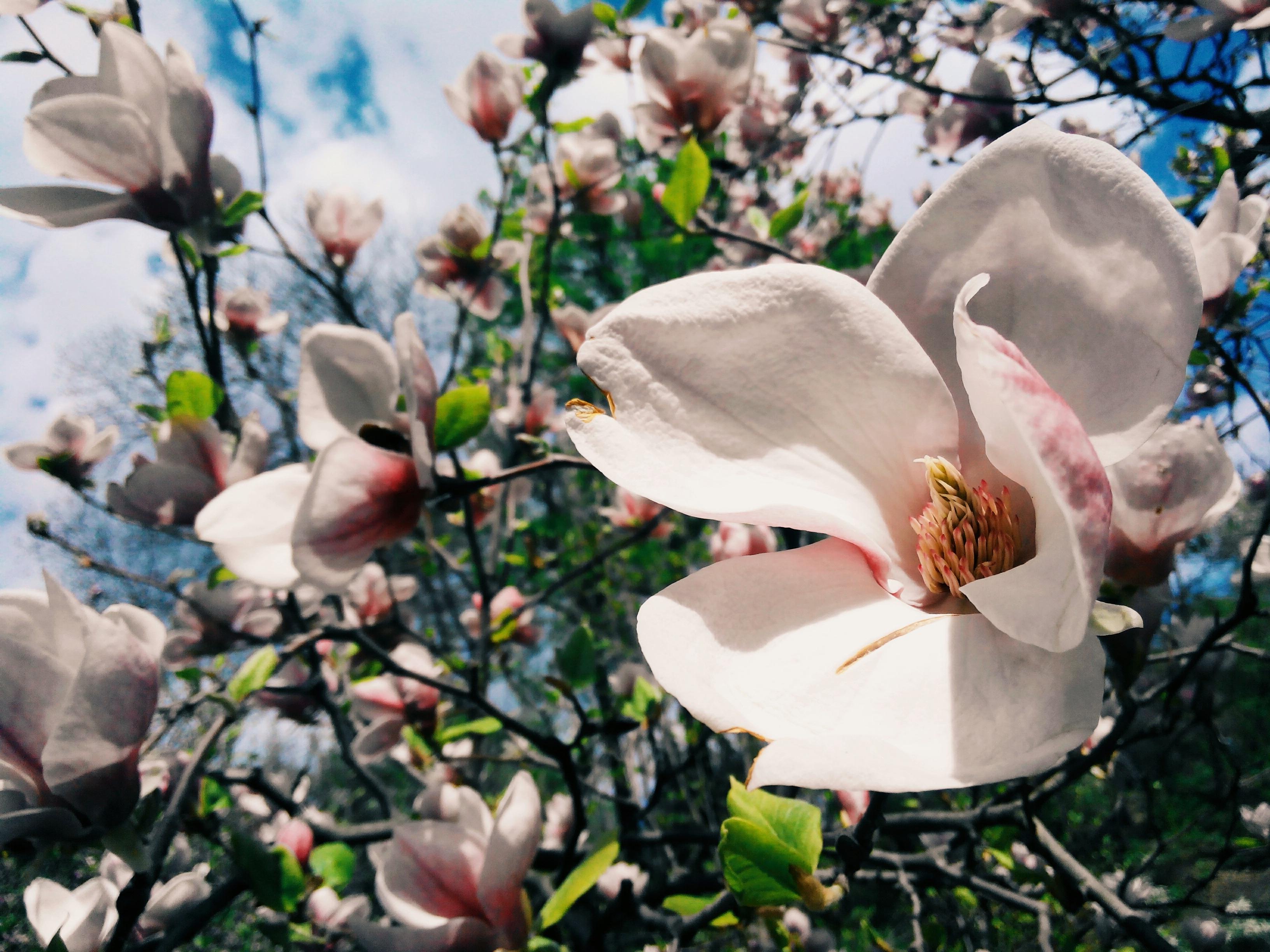 Free Images Landscape Tree Nature Branch Blossom Light Sky