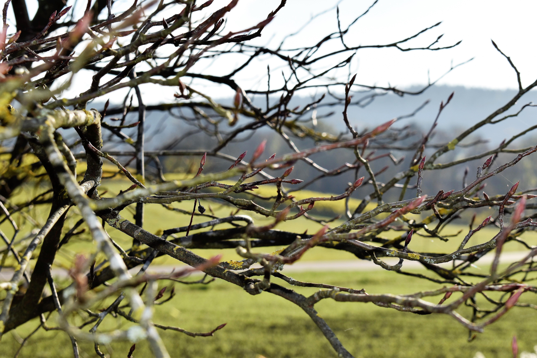 Gambar Pemandangan Pohon Alam Cabang Mekar Menanam Sinar Matahari Daun Bunga Musim Semi Musim Gugur Dekat Flora Ranting Estetis Belukar Tunas Amelanchier Tanaman Berbunga Kayu Tanaman Tanaman Tanah Duri Duri Dan
