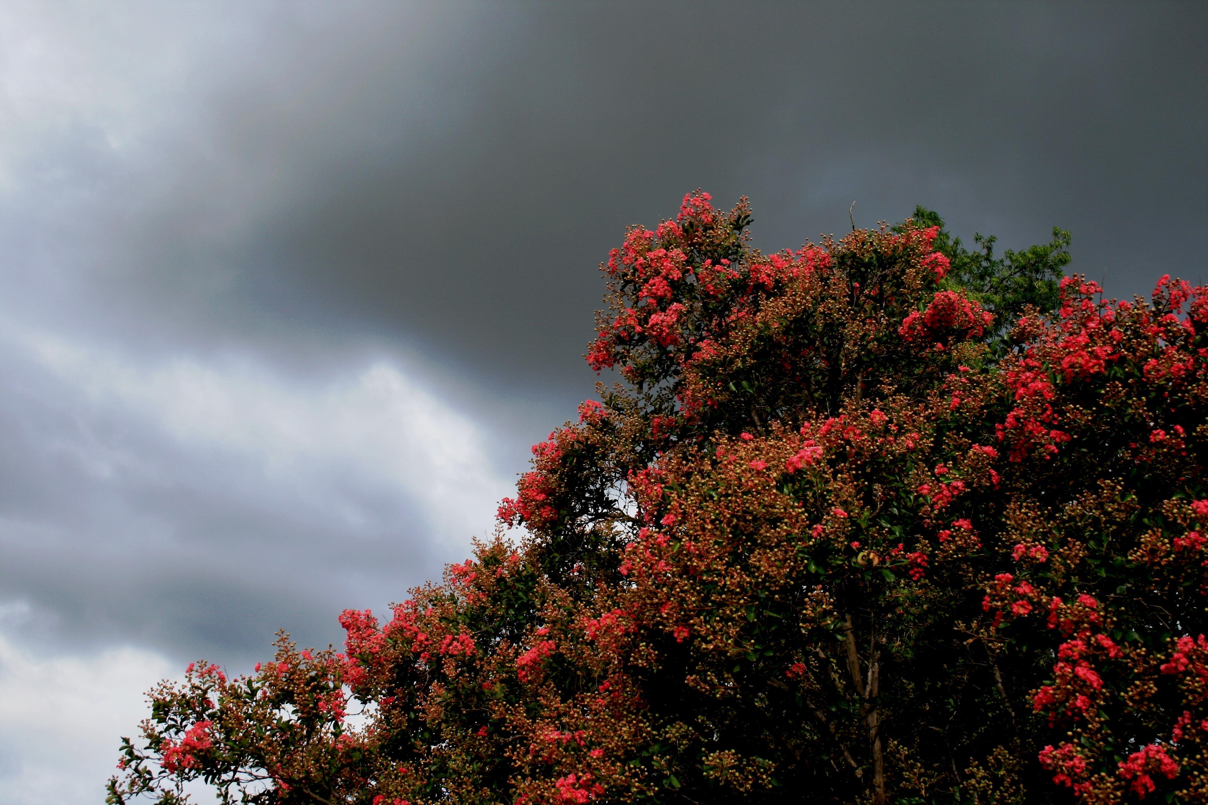 Images gratuites paysage arbre la nature branche for Images du printemps gratuites