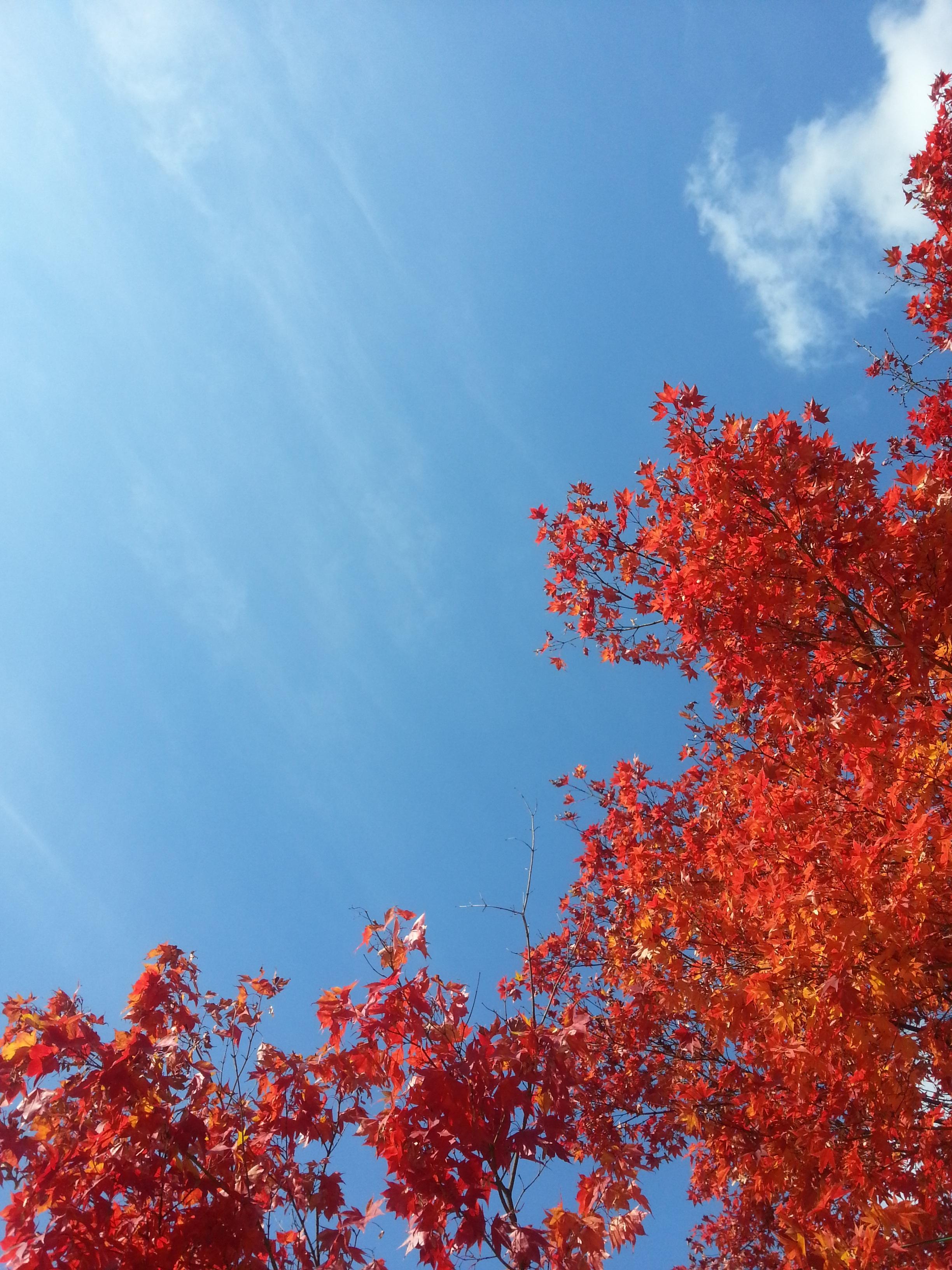 фото небо и листва