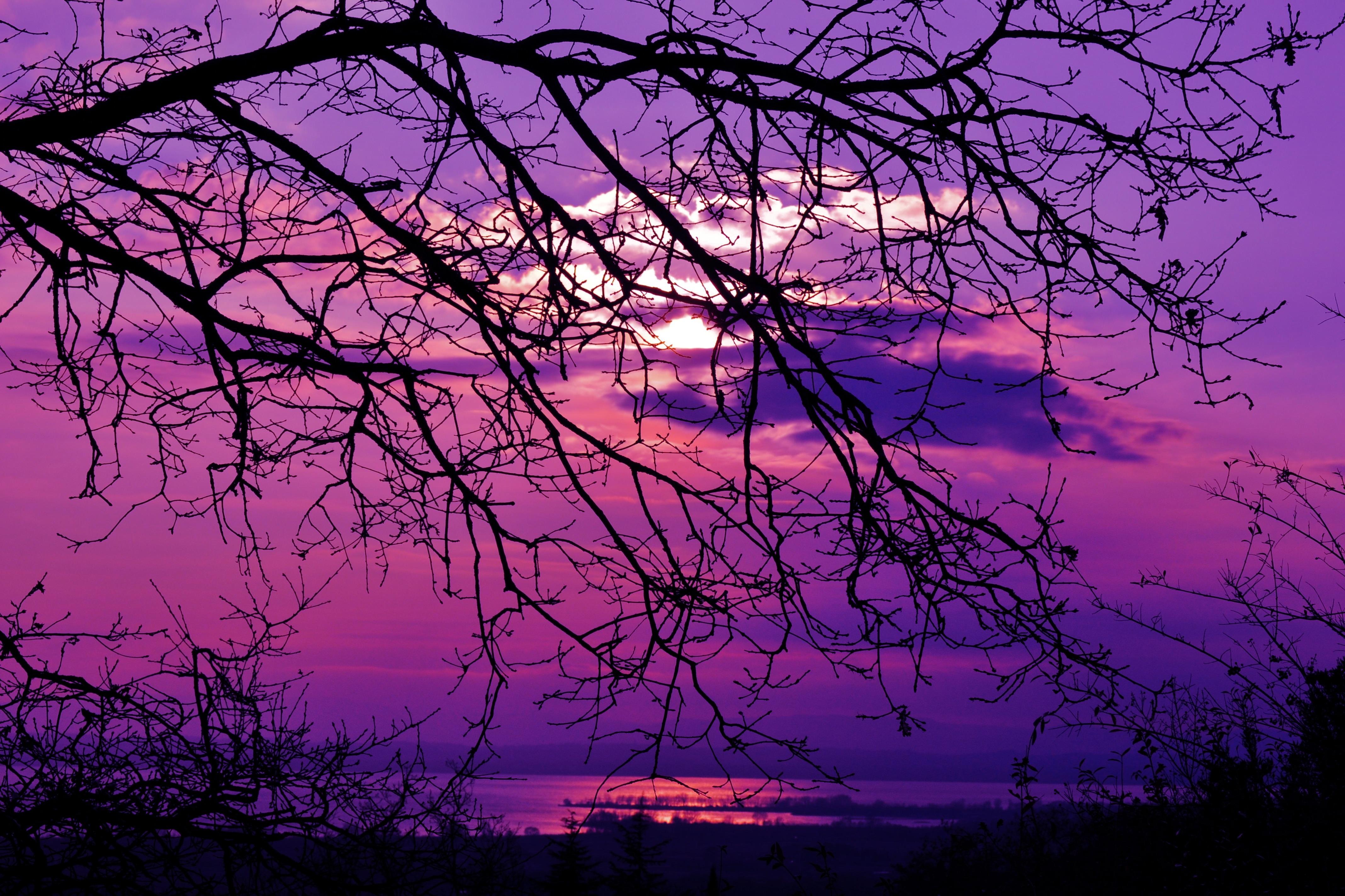 картинки фиолетовый пейзаж это