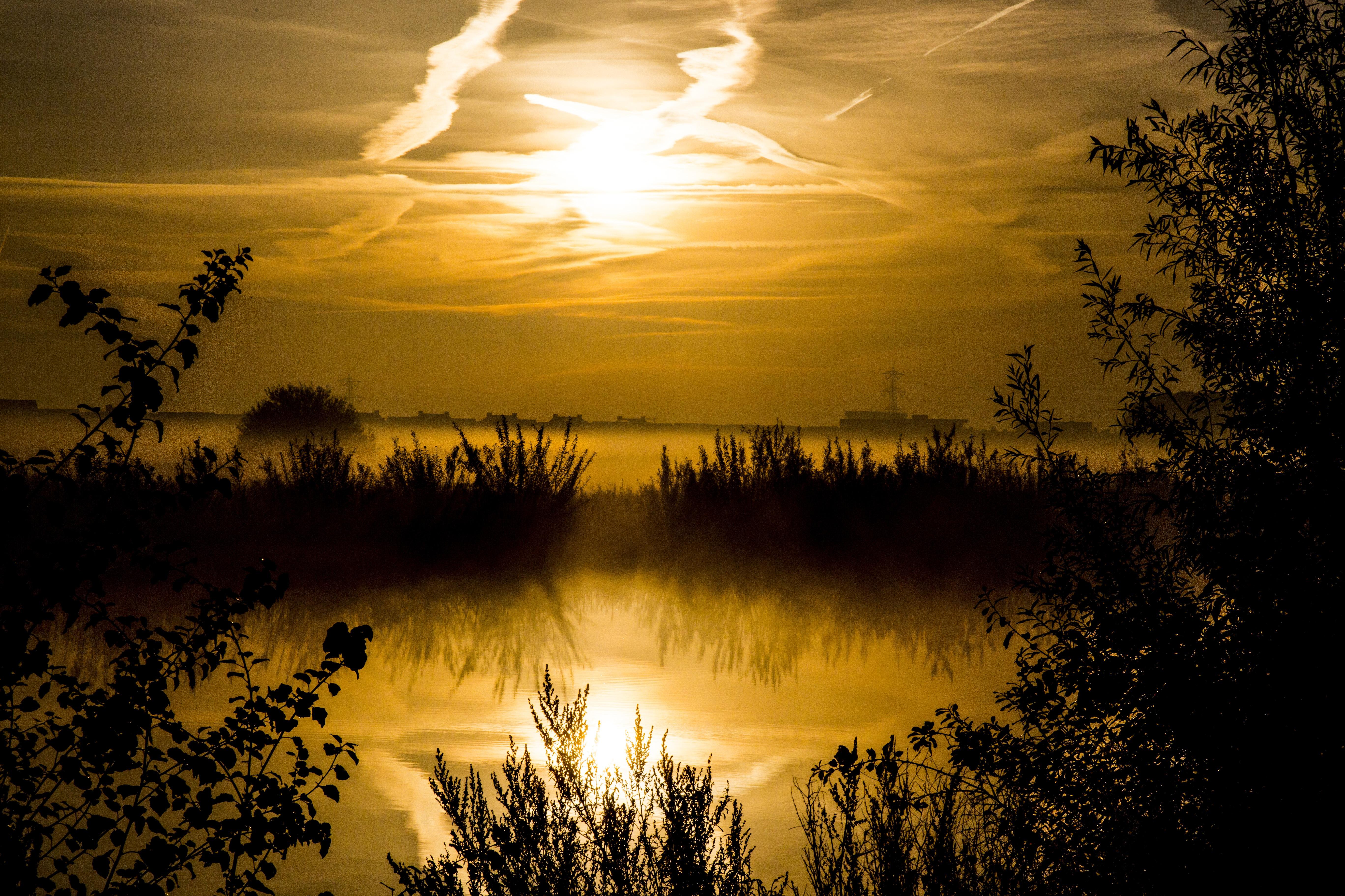 Free Images : landscape, tree, nature, branch, cloud ...