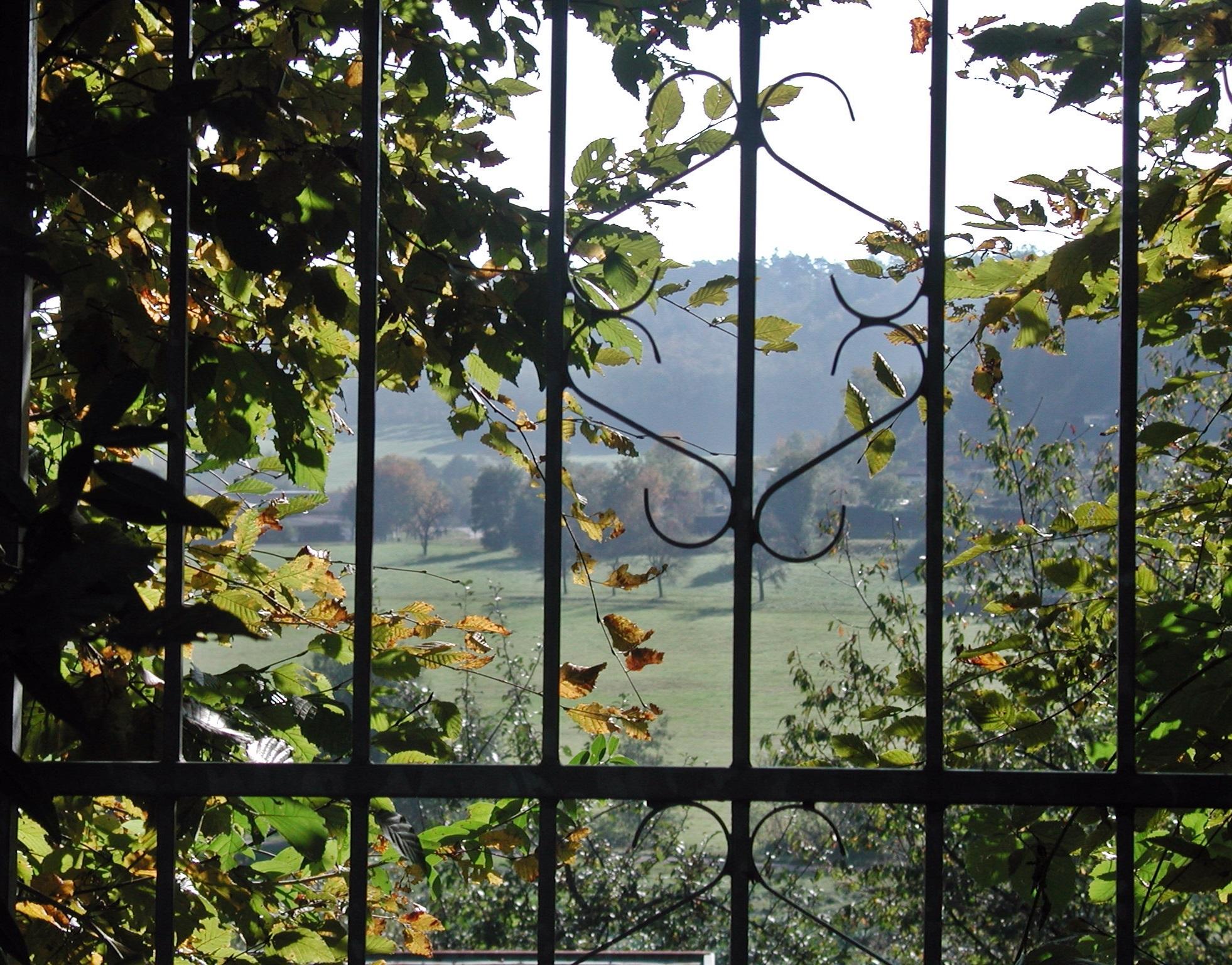Images gratuites paysage arbre la nature branche for Porte vue 60 feuilles