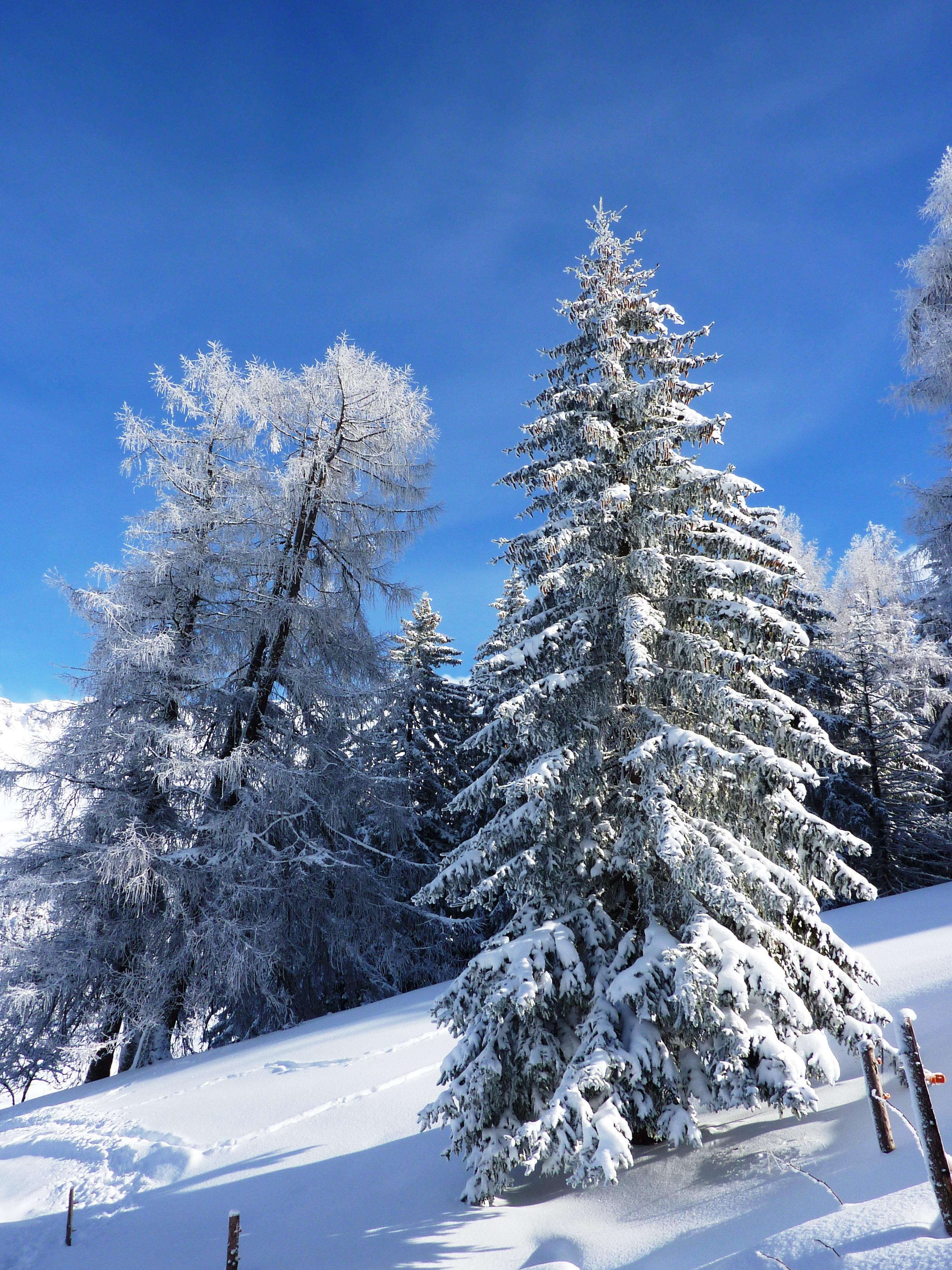 Images gratuites paysage arbre la nature branche - Photos de neige gratuites ...