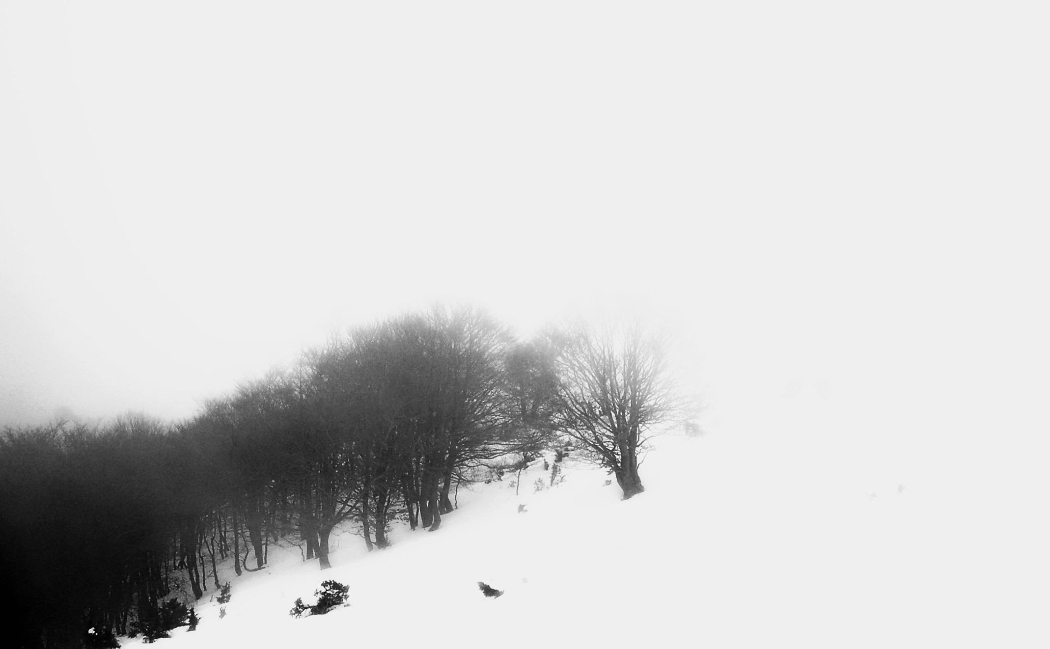 Immagini Belle Paesaggio Albero Natura Ramo Montagna La Neve