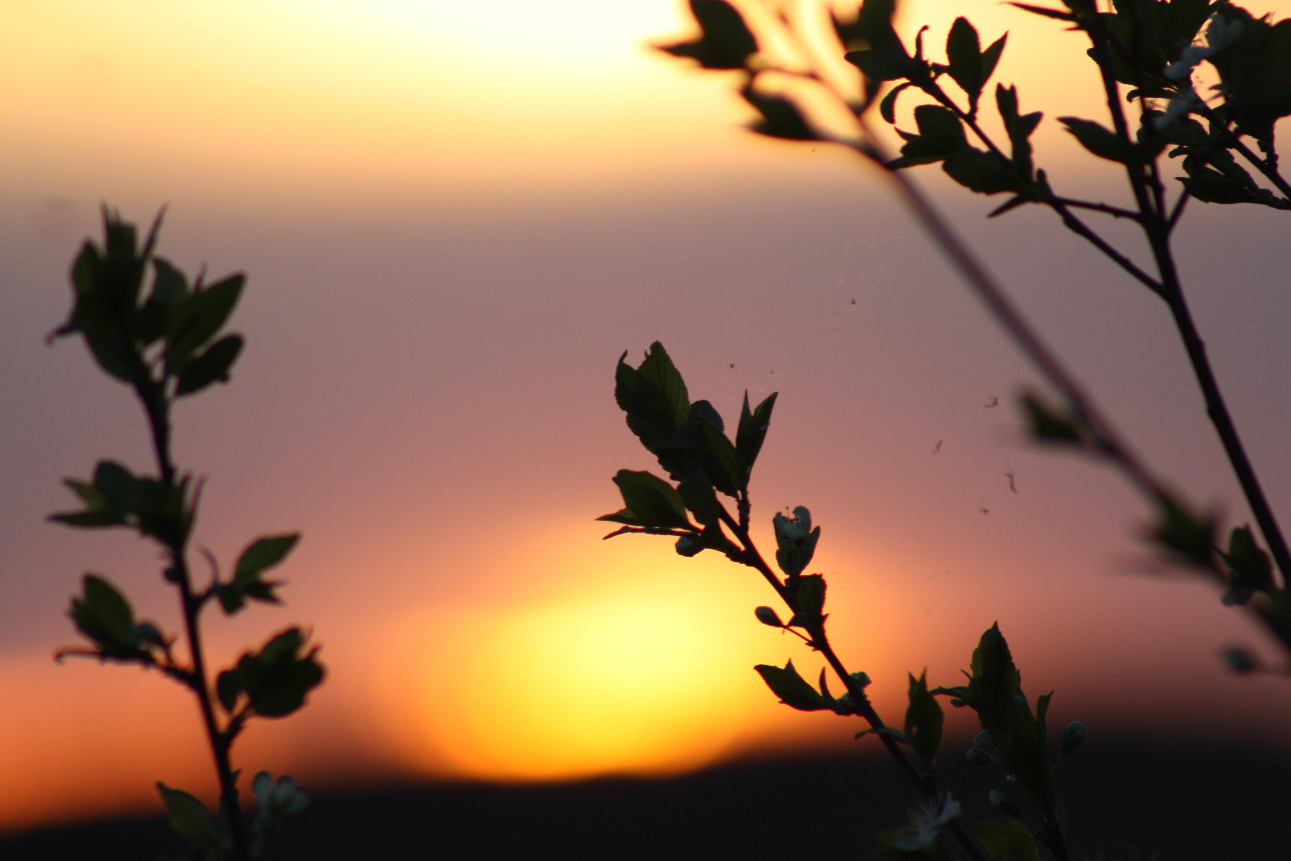 kostenlose foto landschaft baum ast silhouette pflanze himmel sonne sonnenaufgang. Black Bedroom Furniture Sets. Home Design Ideas