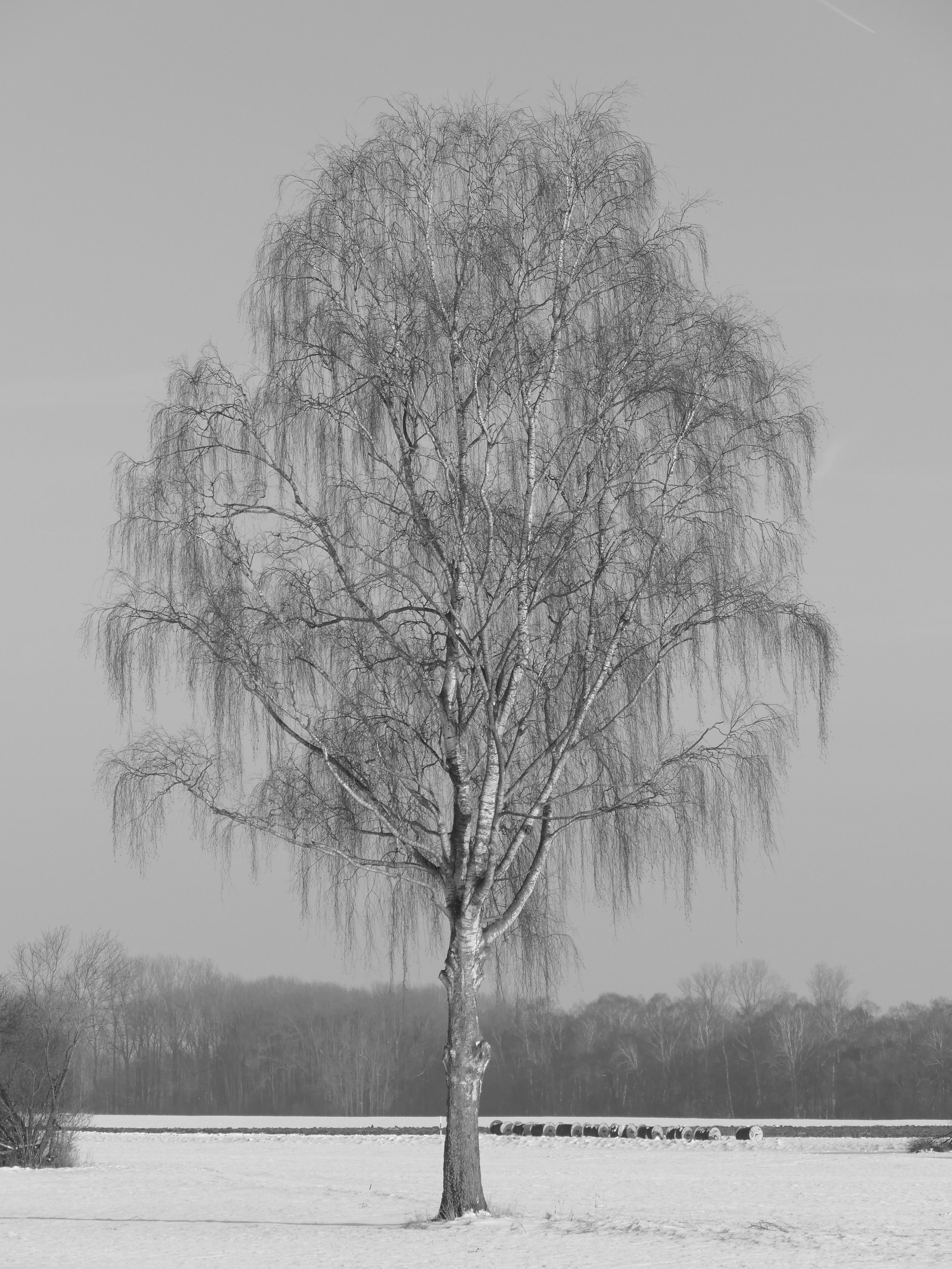 Images Gratuites Paysage Arbre La Nature Branche Du