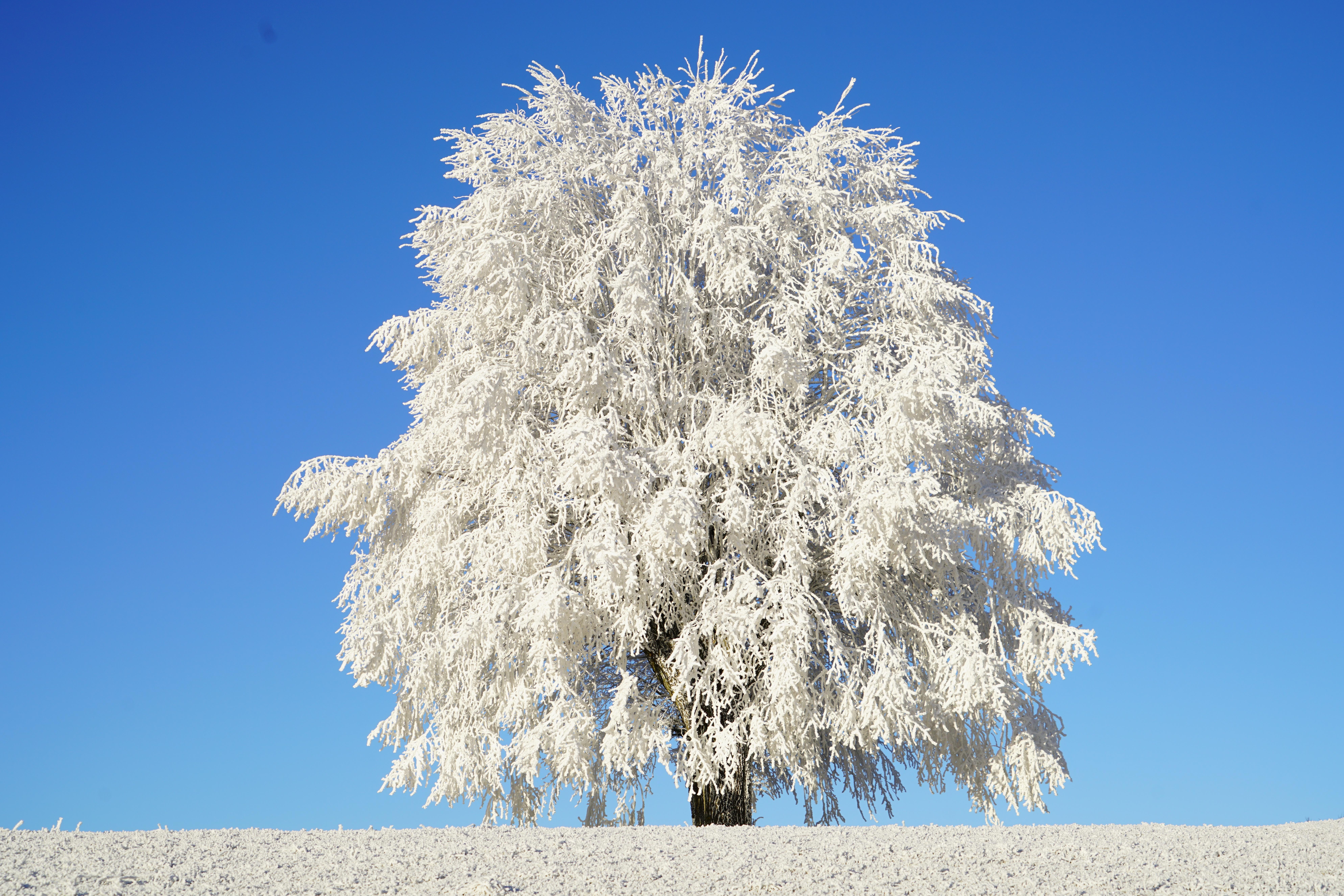 Снежное дерево картинки для детей