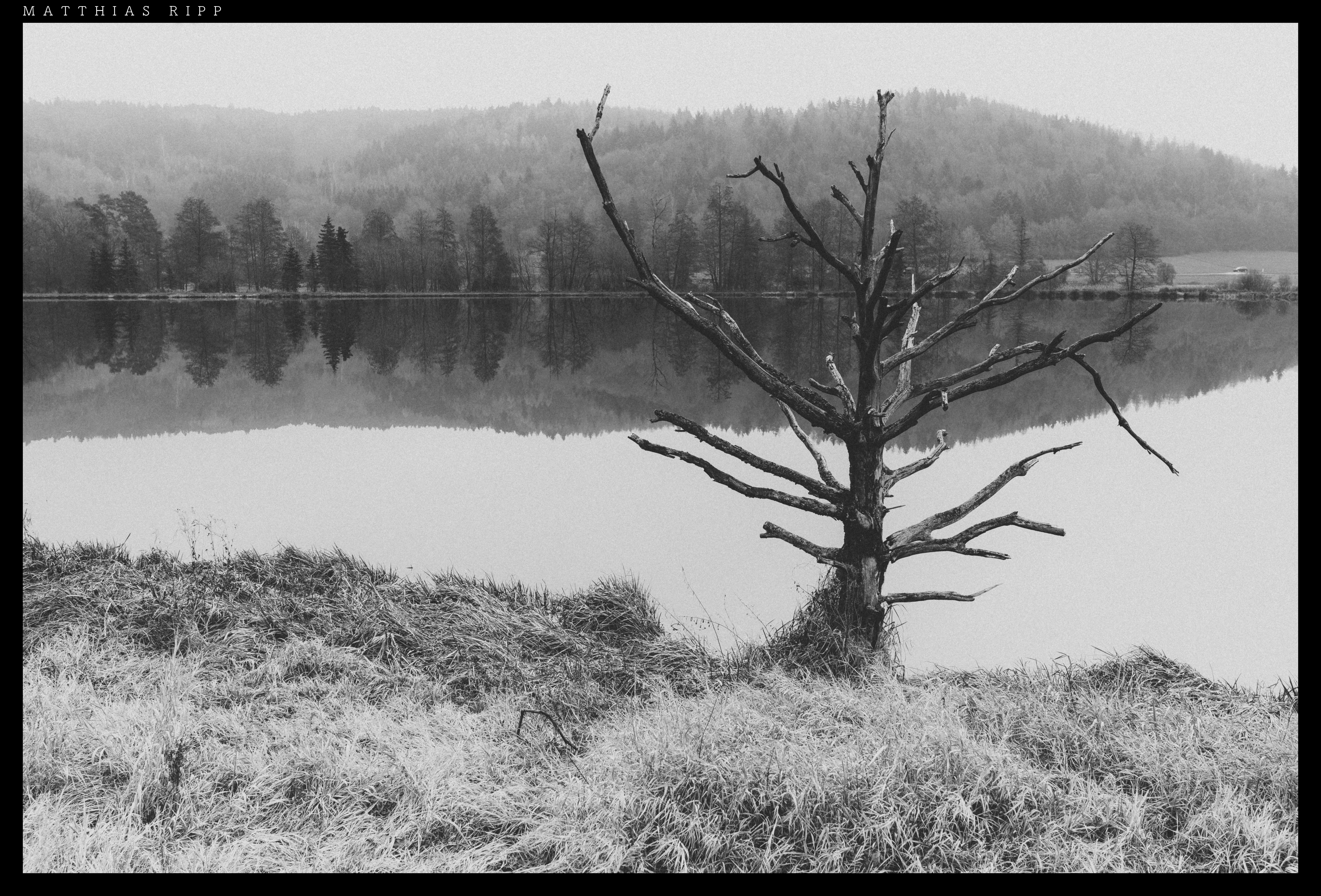 Kostenlose foto : Landschaft, Baum, Natur, Ast, Schnee, Winter ...