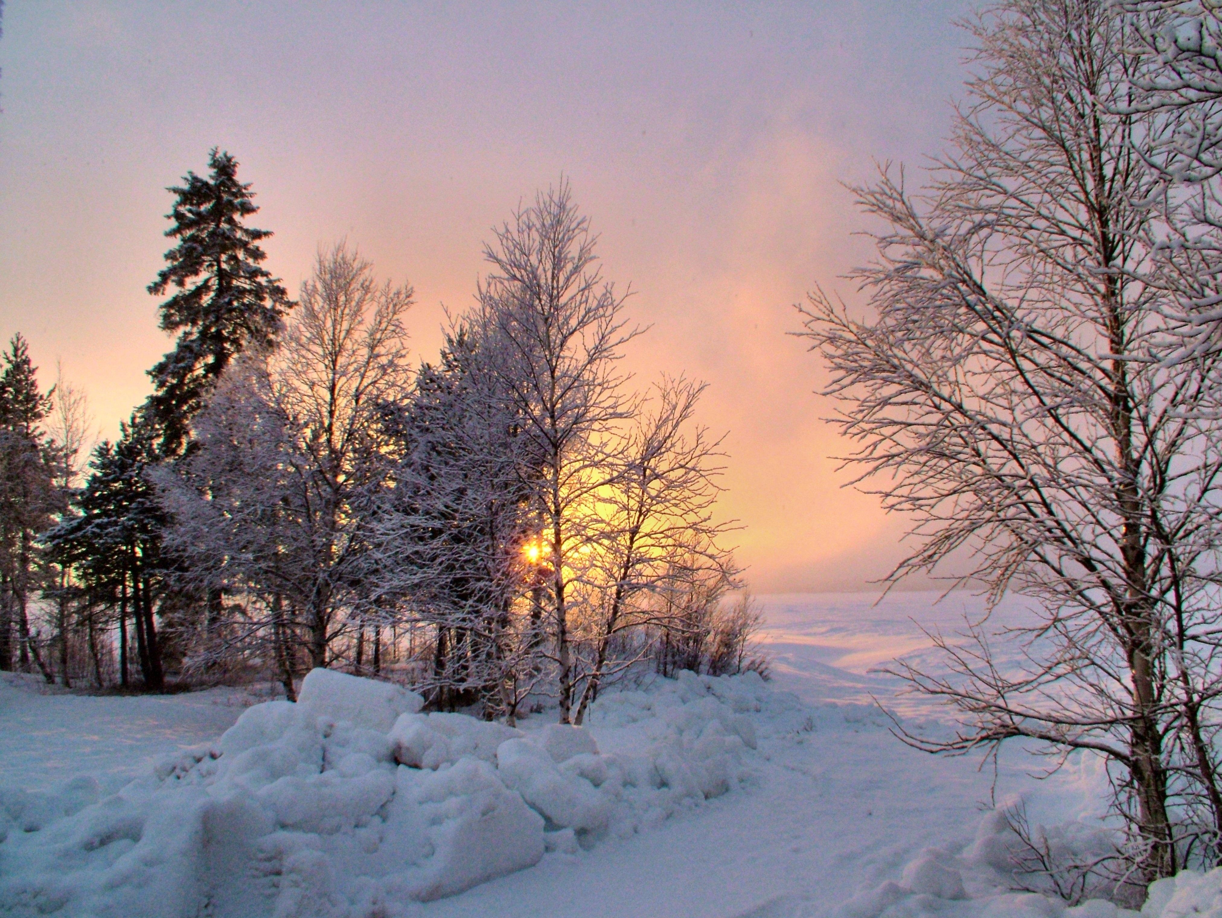 пейзаж север зима фото растет лиственных лесах
