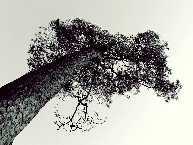 Images Gratuites Paysage Arbre La Nature Branche Hiver Noir
