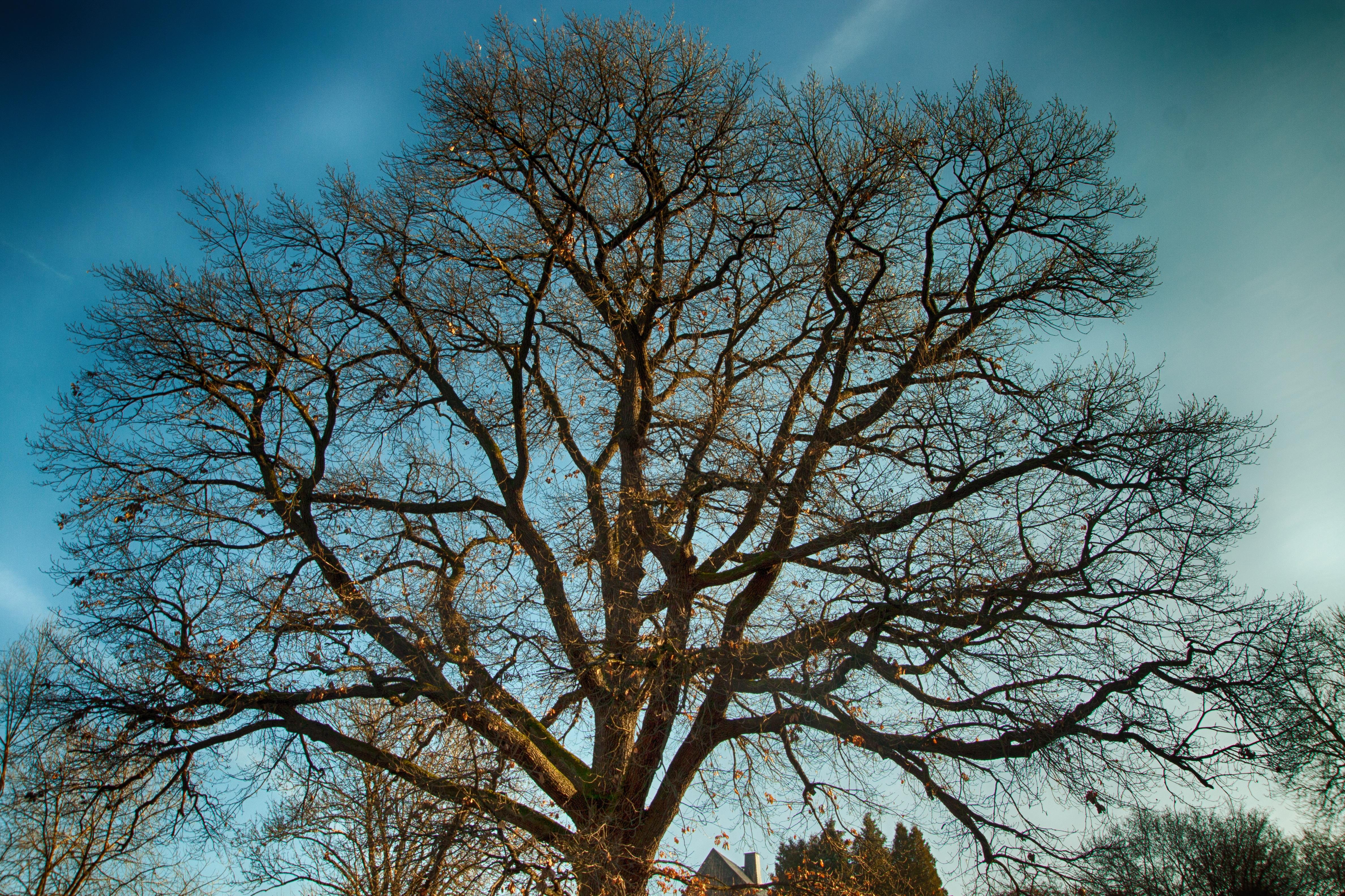 дерево без листвы фото счастью