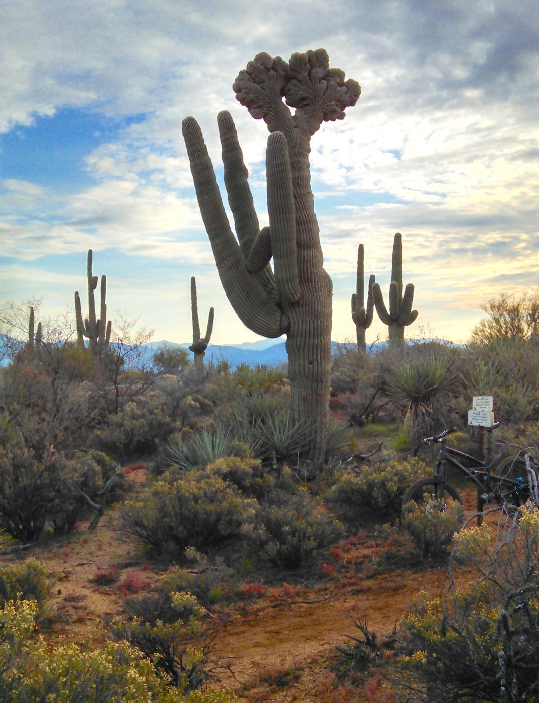 Free Images : landscape, tree, nature, cactus, desert ...
