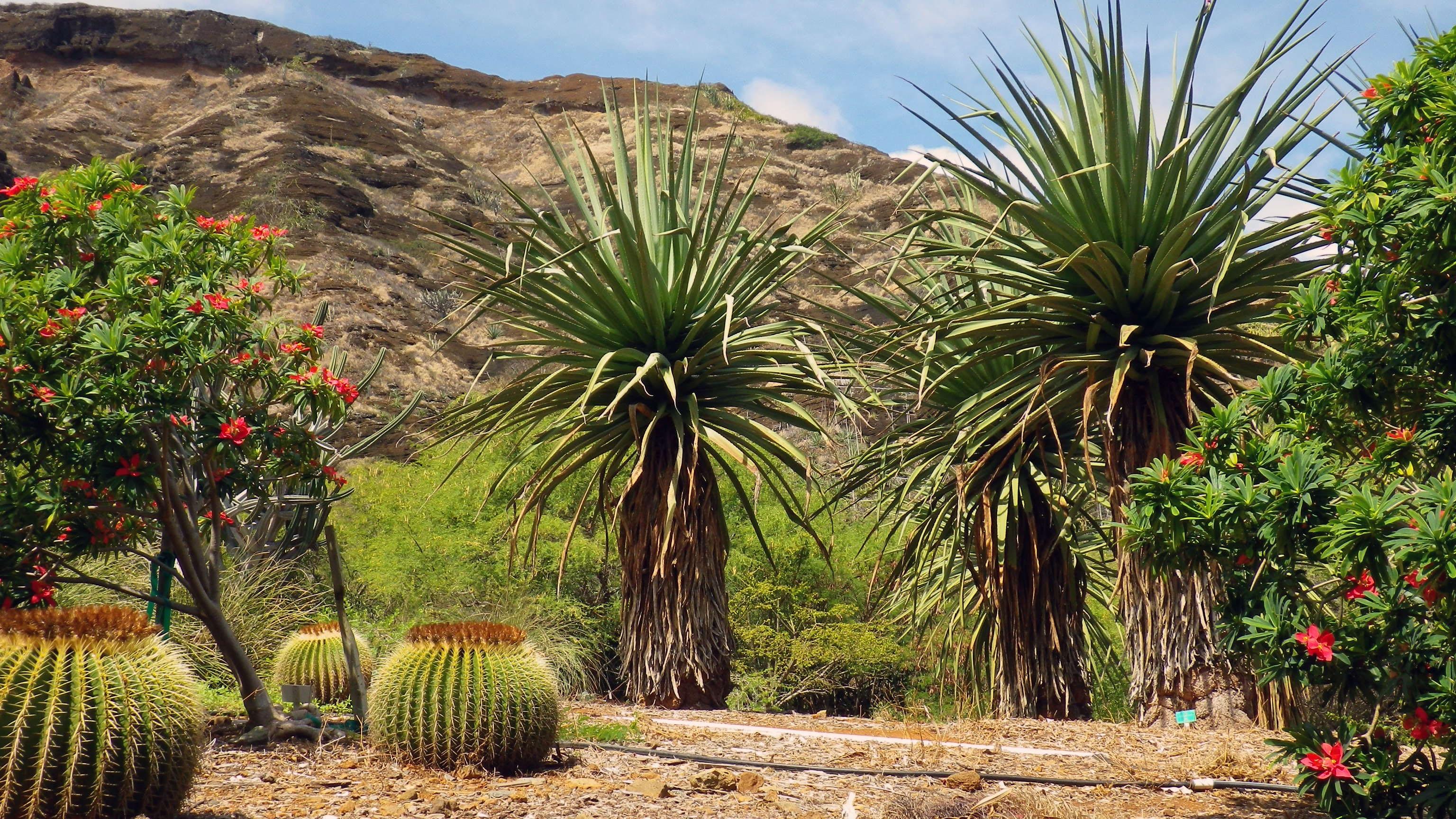 Fotos gratis : paisaje, árbol, naturaleza, cactus ...
