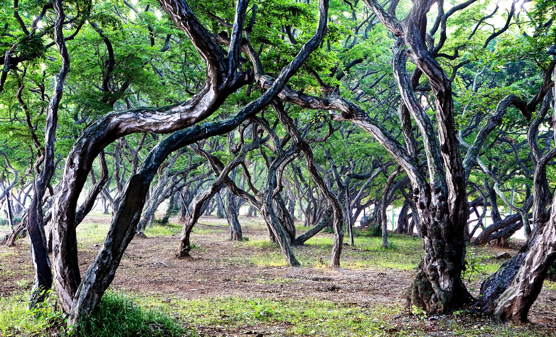 Fotos gratis paisaje rbol naturaleza rama abstracto for Arboles para plantar en verano