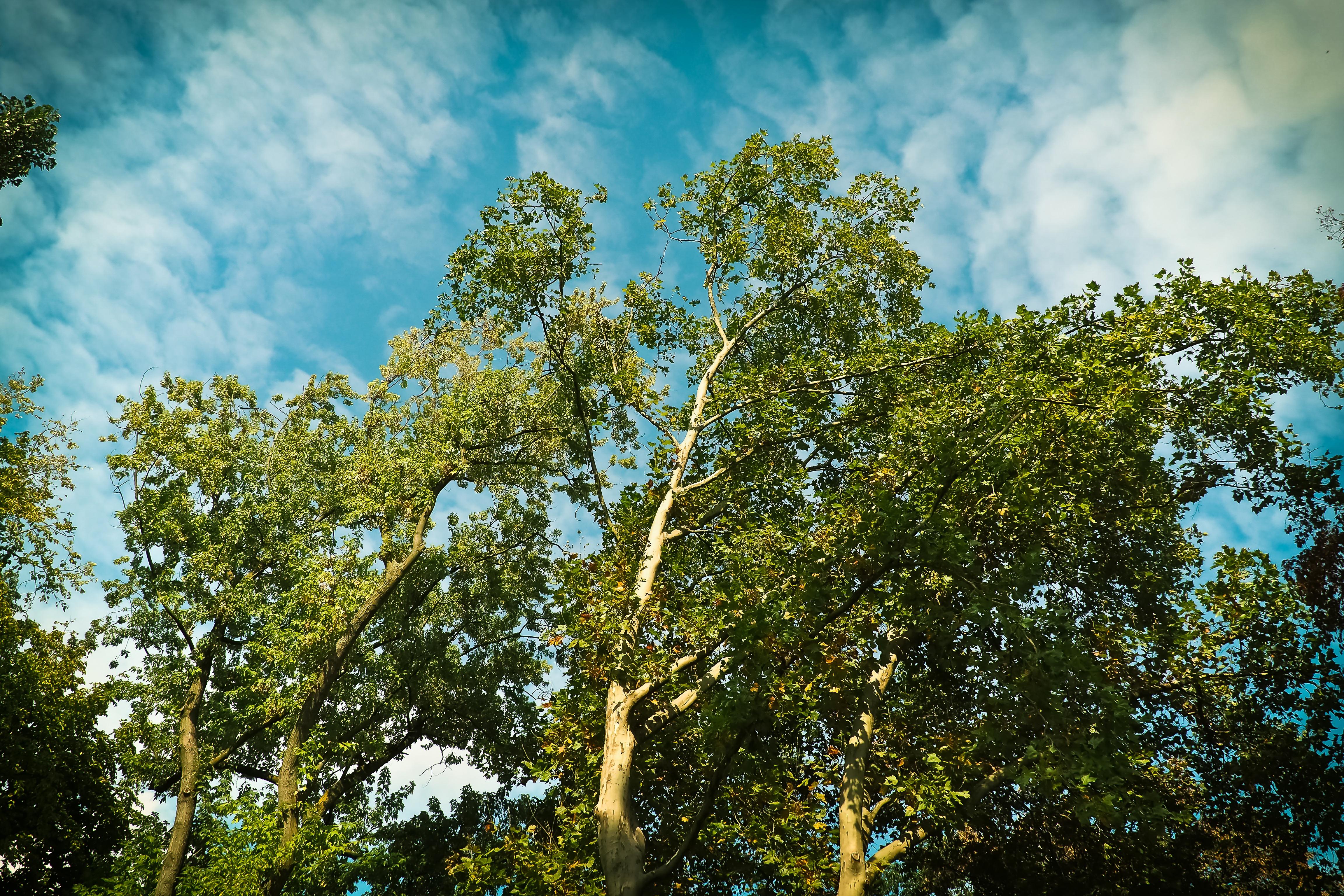 Fotos gratis : paisaje, naturaleza, rama, nube, planta, madera ...