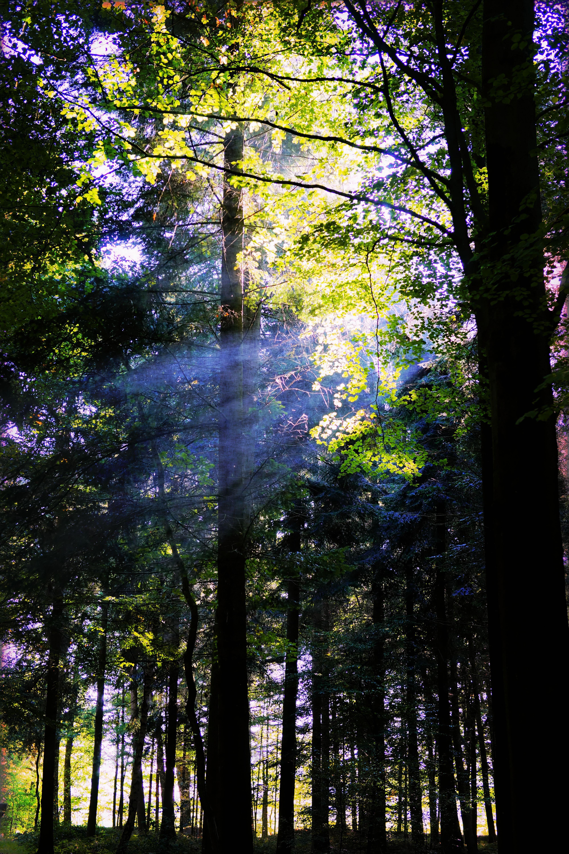 Kostenlose foto : Landschaft, Baum, Natur, Wald, Ast, Licht ...