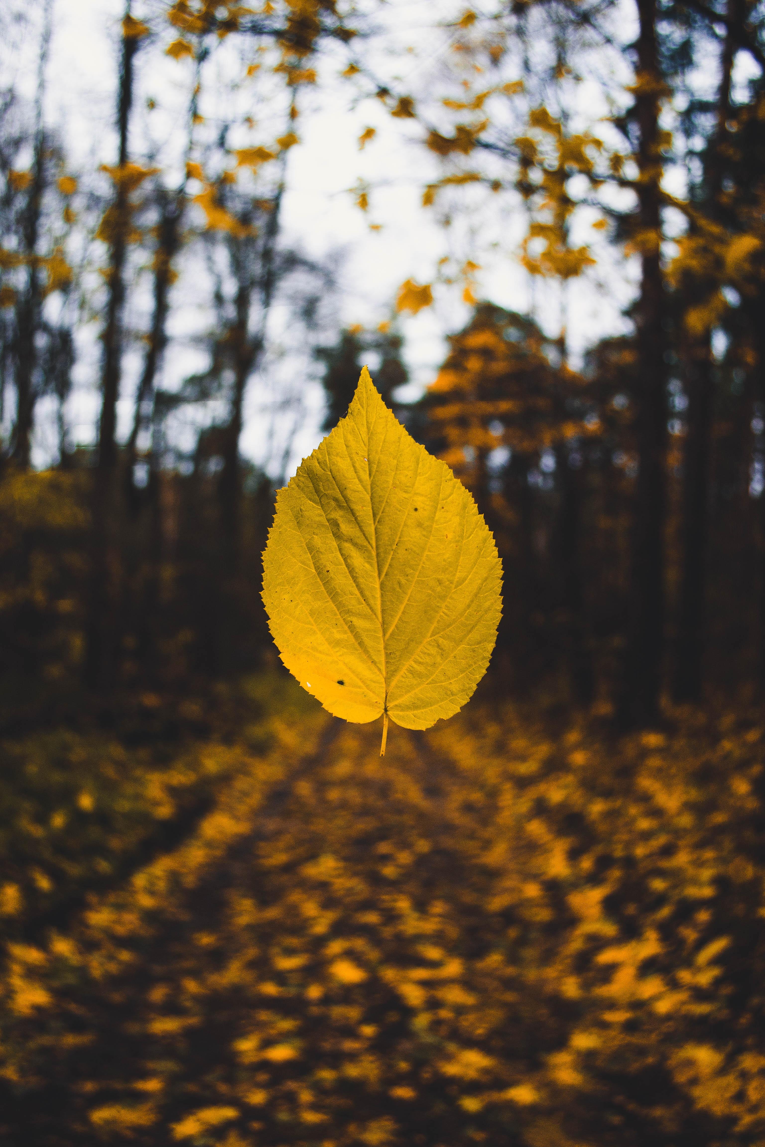 free images   landscape  tree  branch  light  blur  sunset