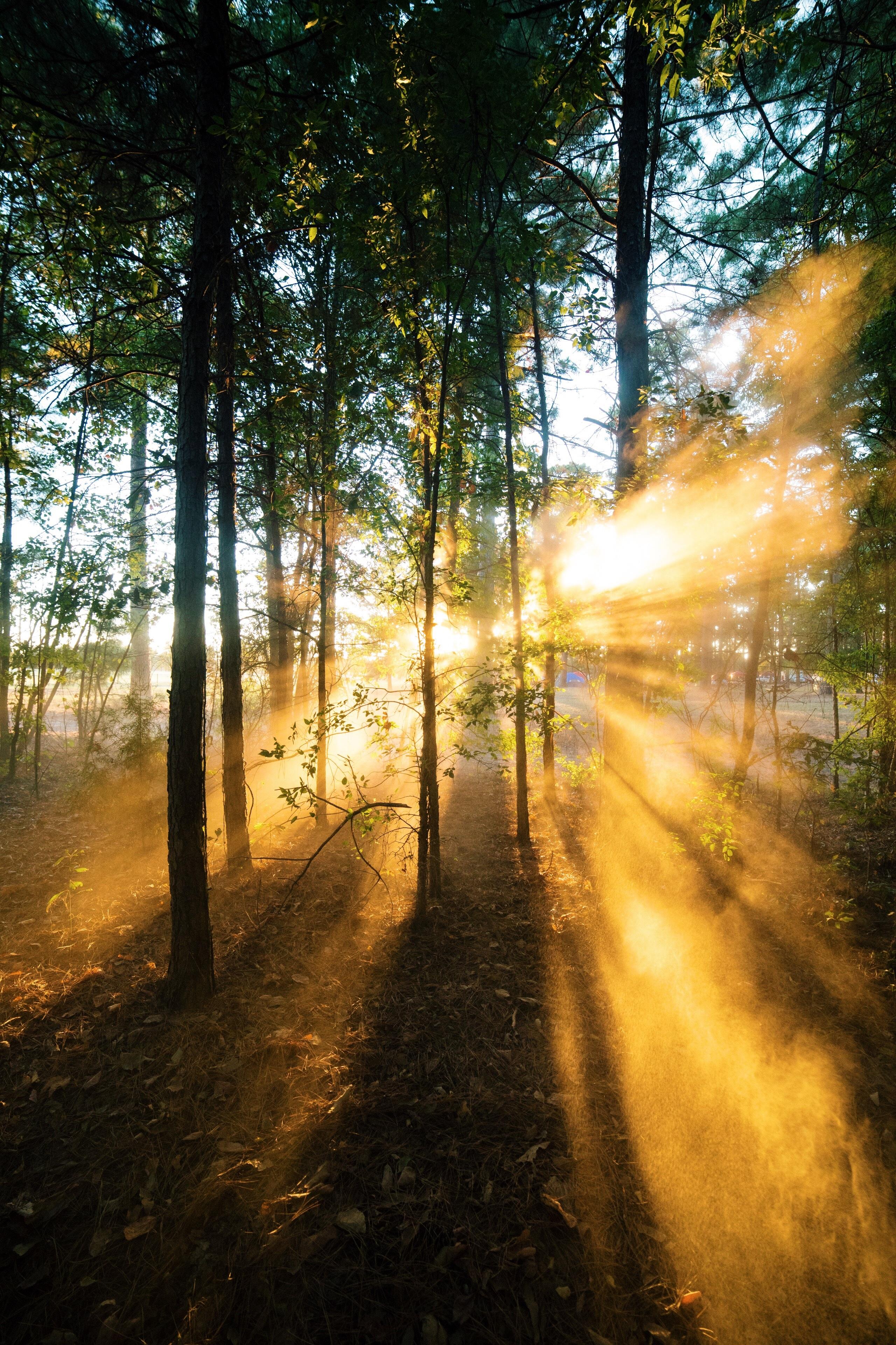 sun fog sunrise trees - photo #14