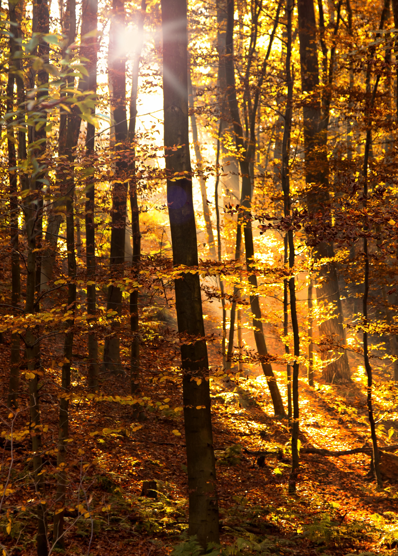 kostenlose foto baum natur wald ast licht stra 223 e sonnenlicht blatt blume gr 252 n kurve kostenlose foto landschaft baum natur wald ast licht sonnenschein sonne sonnenlicht