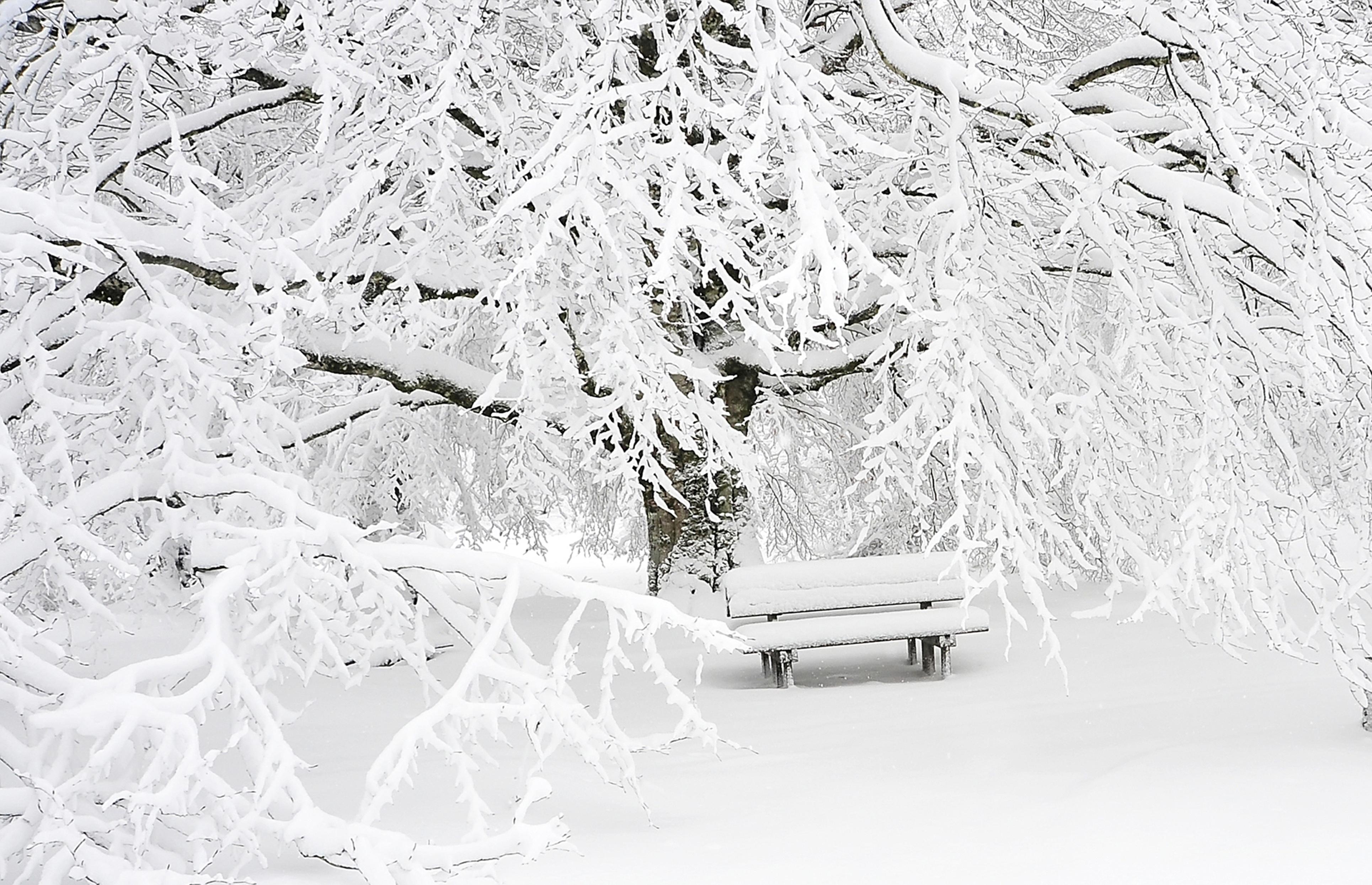 Gambar Pemandangan Pohon Alam Hutan Cabang Musim