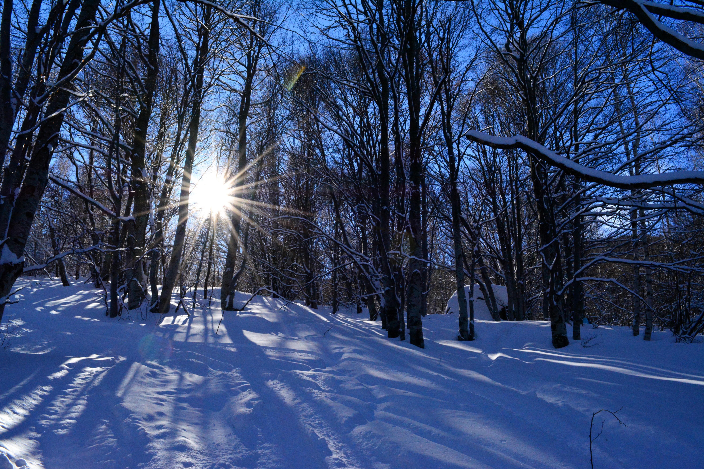 Gambar Pemandangan Alam Cabang Gunung Musim Dingin Cahaya