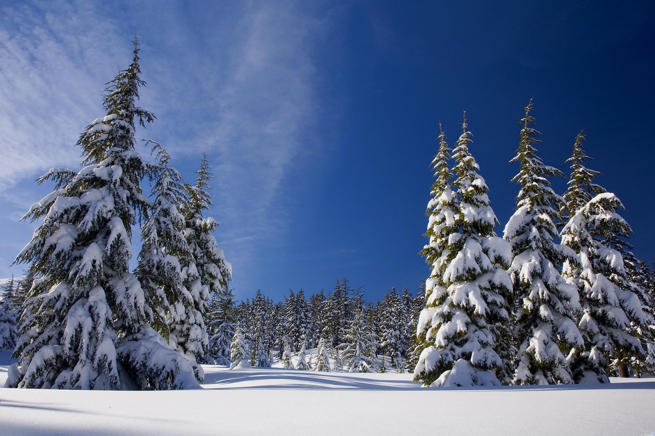 фото зимнего леса под новый год отвара этой ягоды
