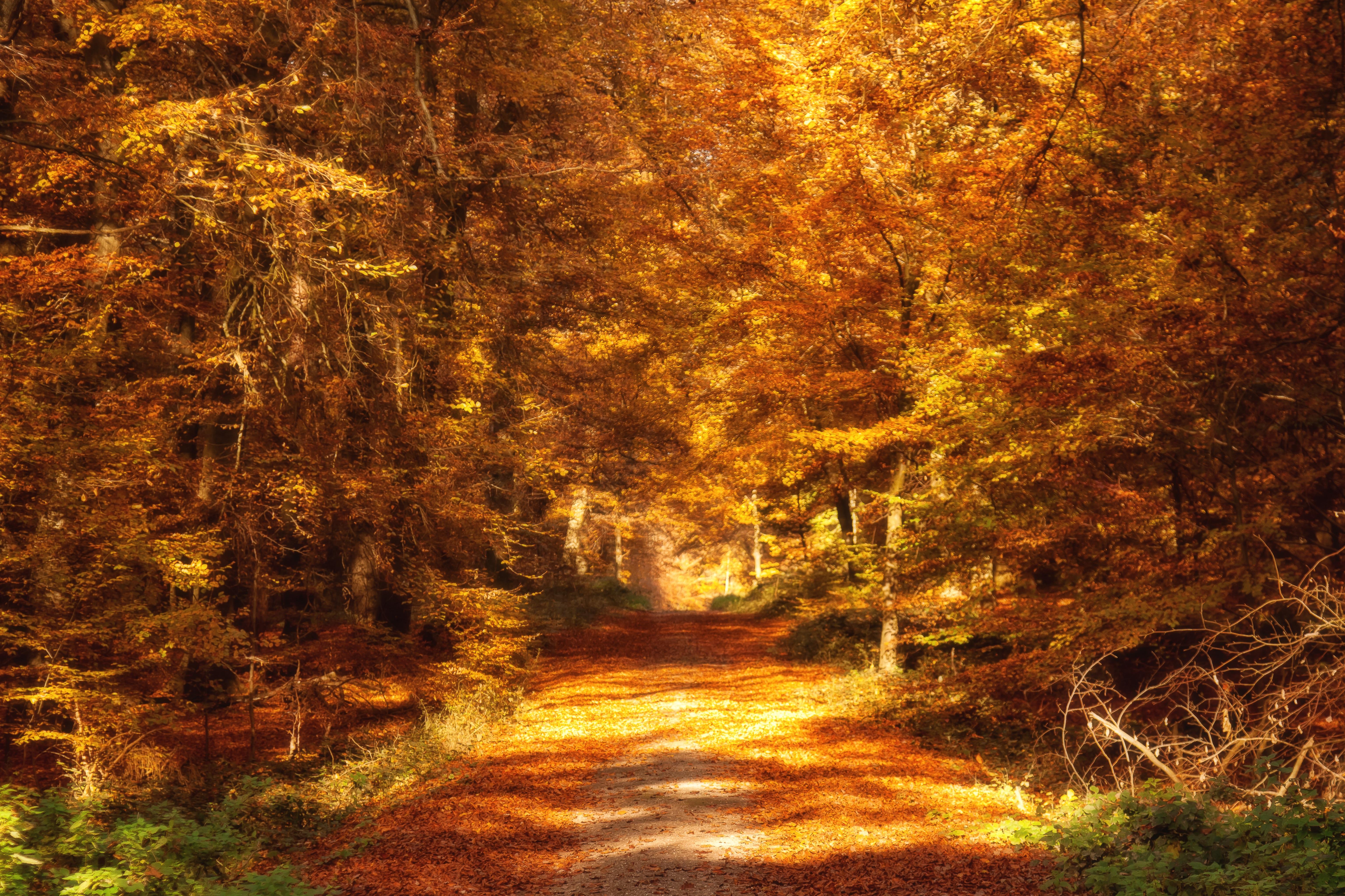 Images gratuites paysage arbre la nature for t branche plante randonn e lumi re du - Images d automne gratuites ...