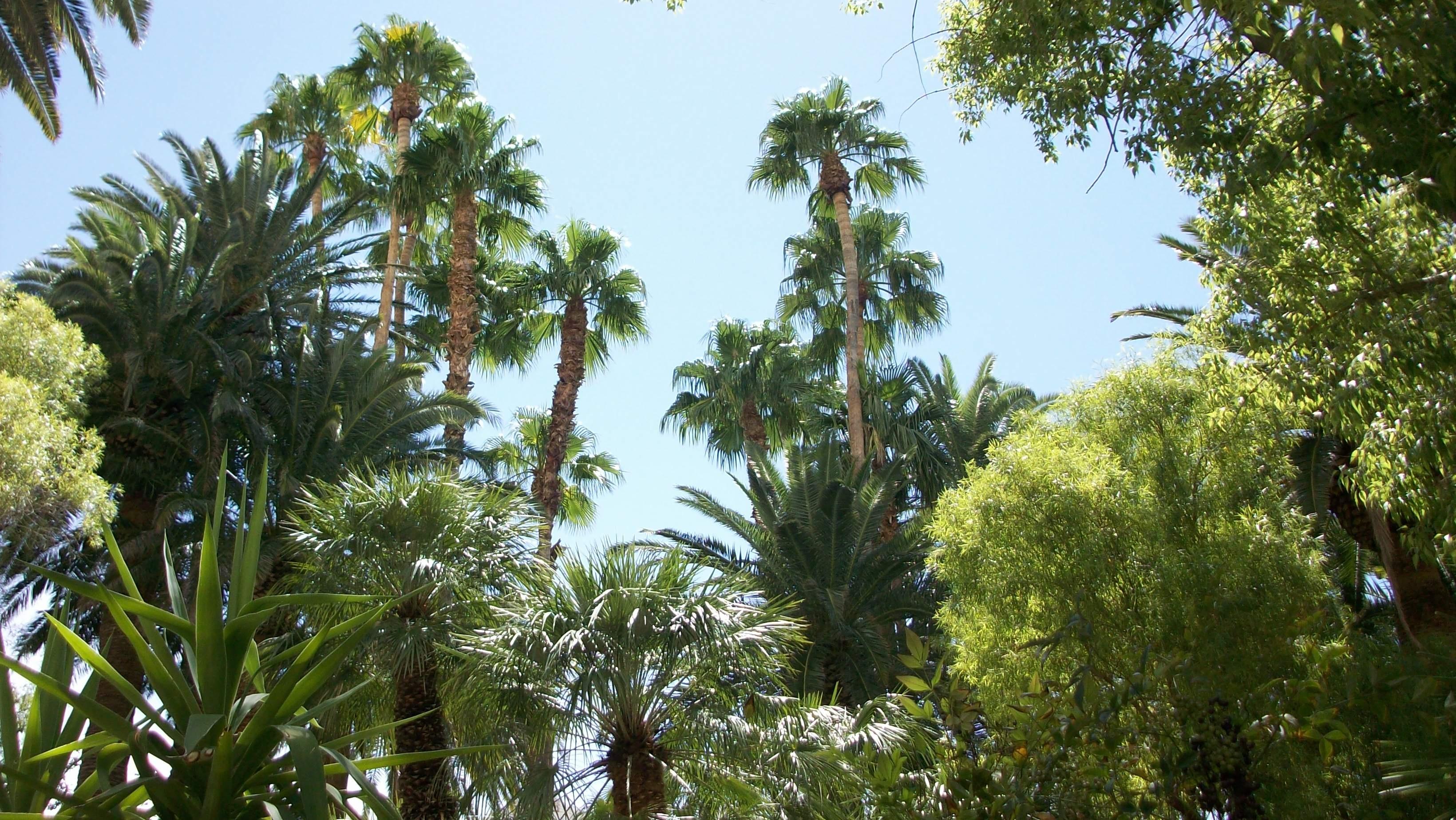 Images gratuites paysage arbre la nature branche for Arbres a feuilles persistantes