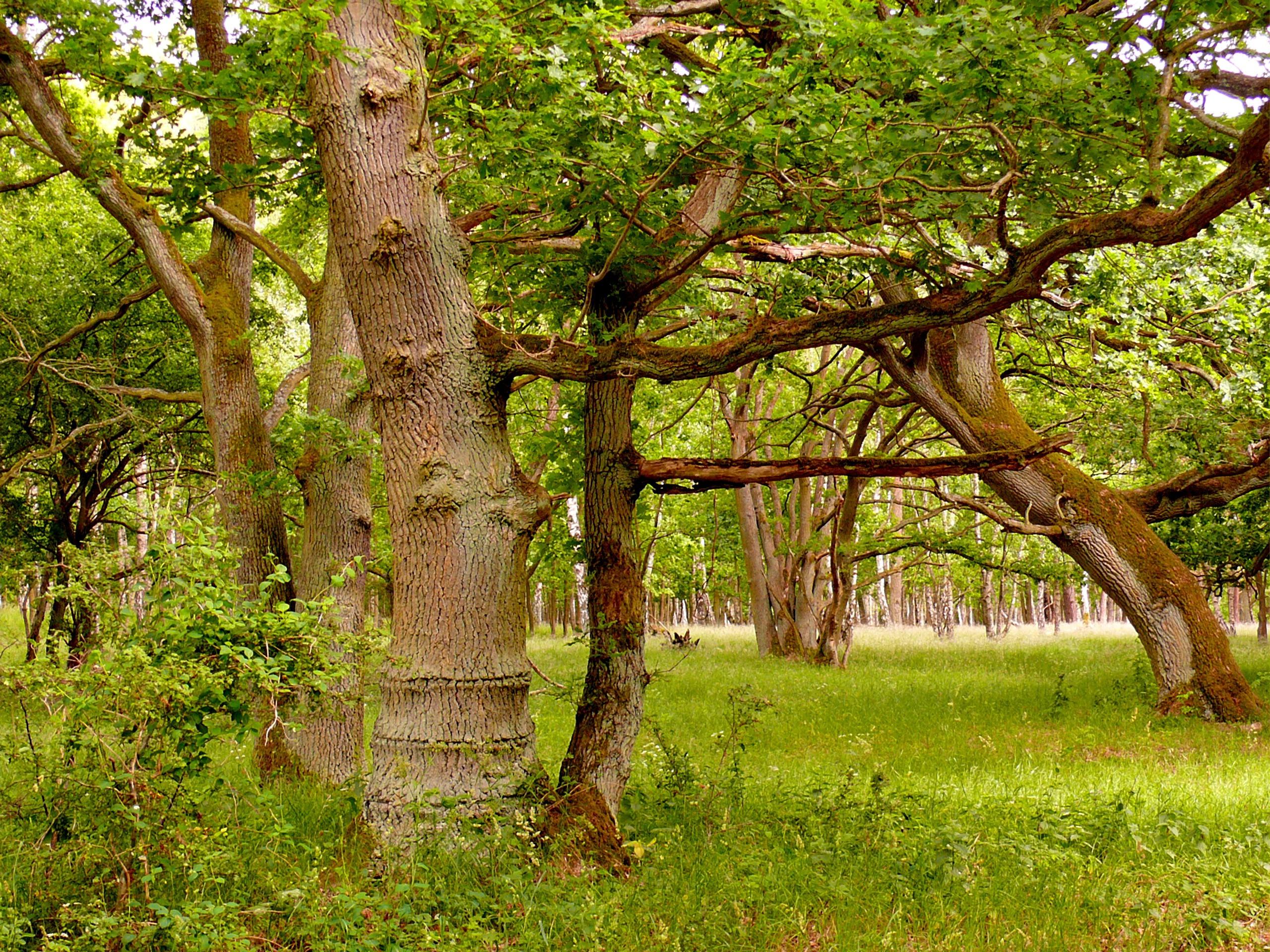 Images gratuites paysage arbre la nature for t - Arbres a feuilles caduques ...