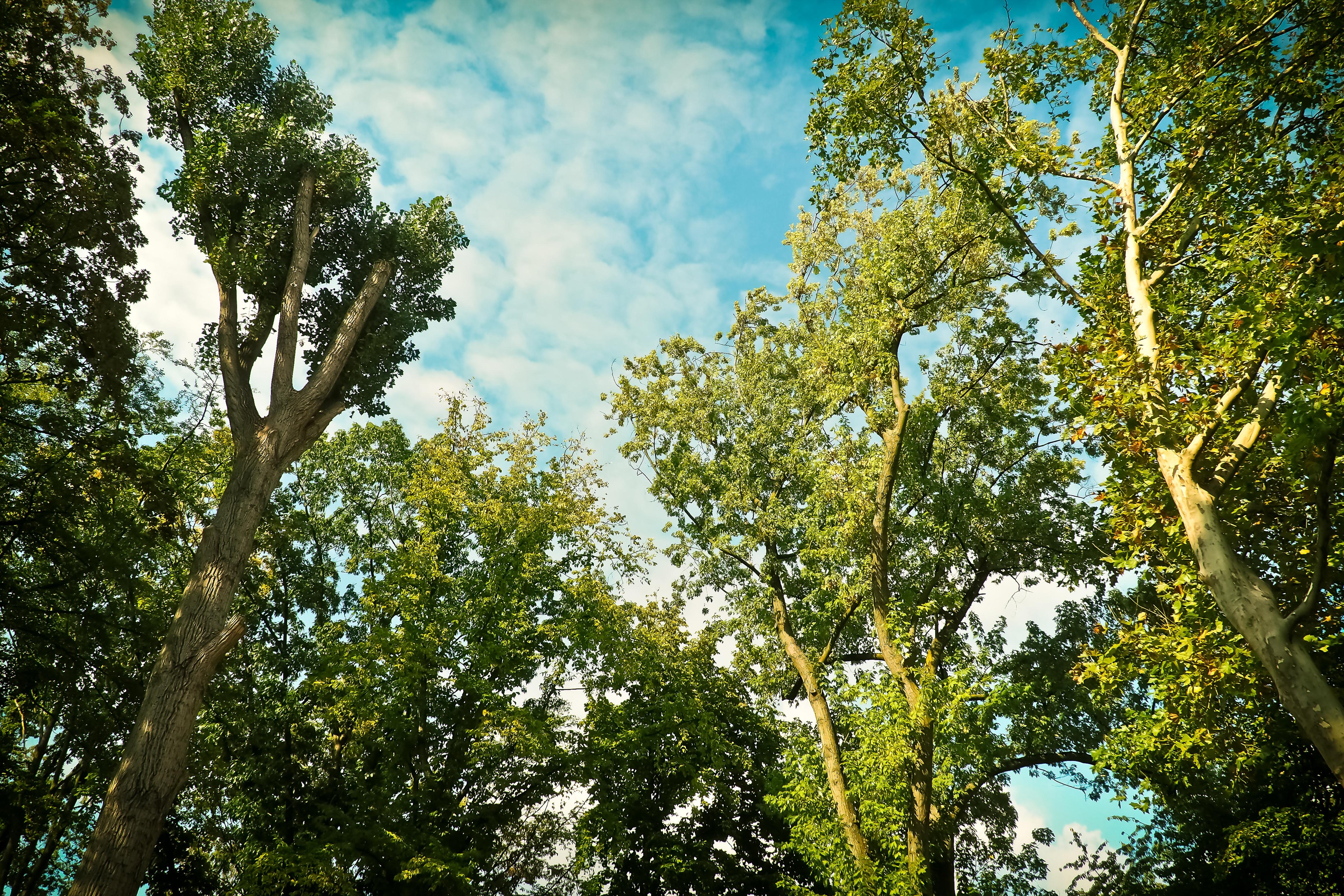 Fotos gratis : paisaje, naturaleza, rama, planta, madera ...