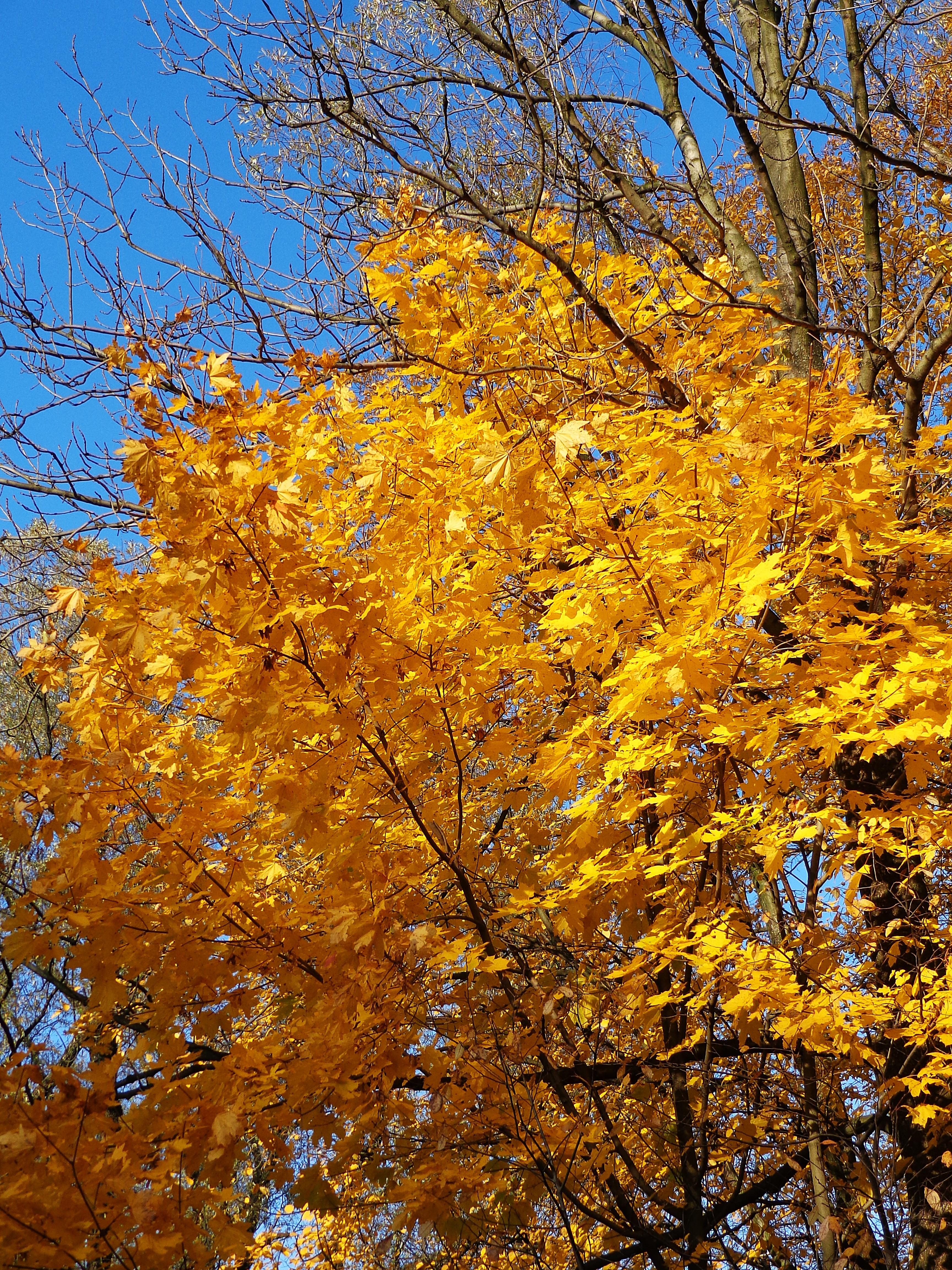Free Images Landscape Nature Forest Branch Sunlight Leaf