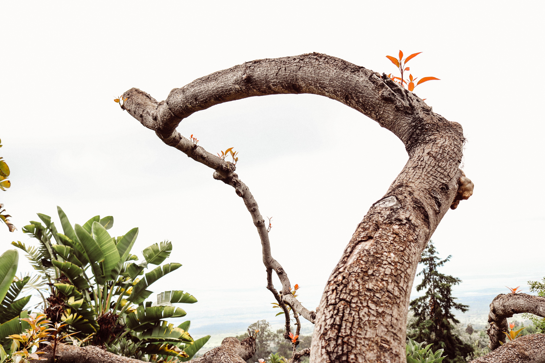Fotos gratis paisaje rbol naturaleza bosque rama for Arboles para plantar en verano