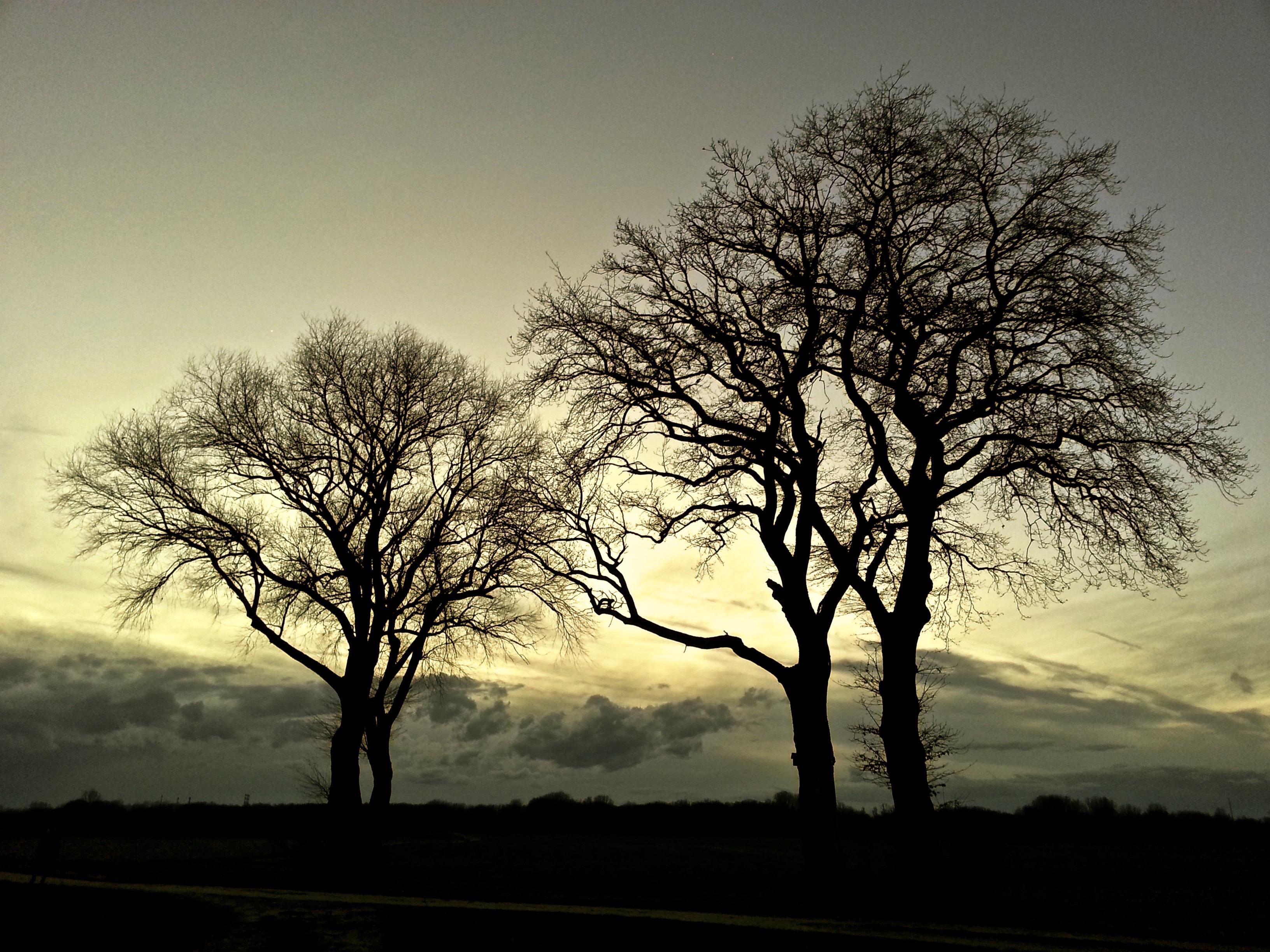 Gratis Afbeeldingen : landschap, natuur, Bos, tak, silhouet, licht ...