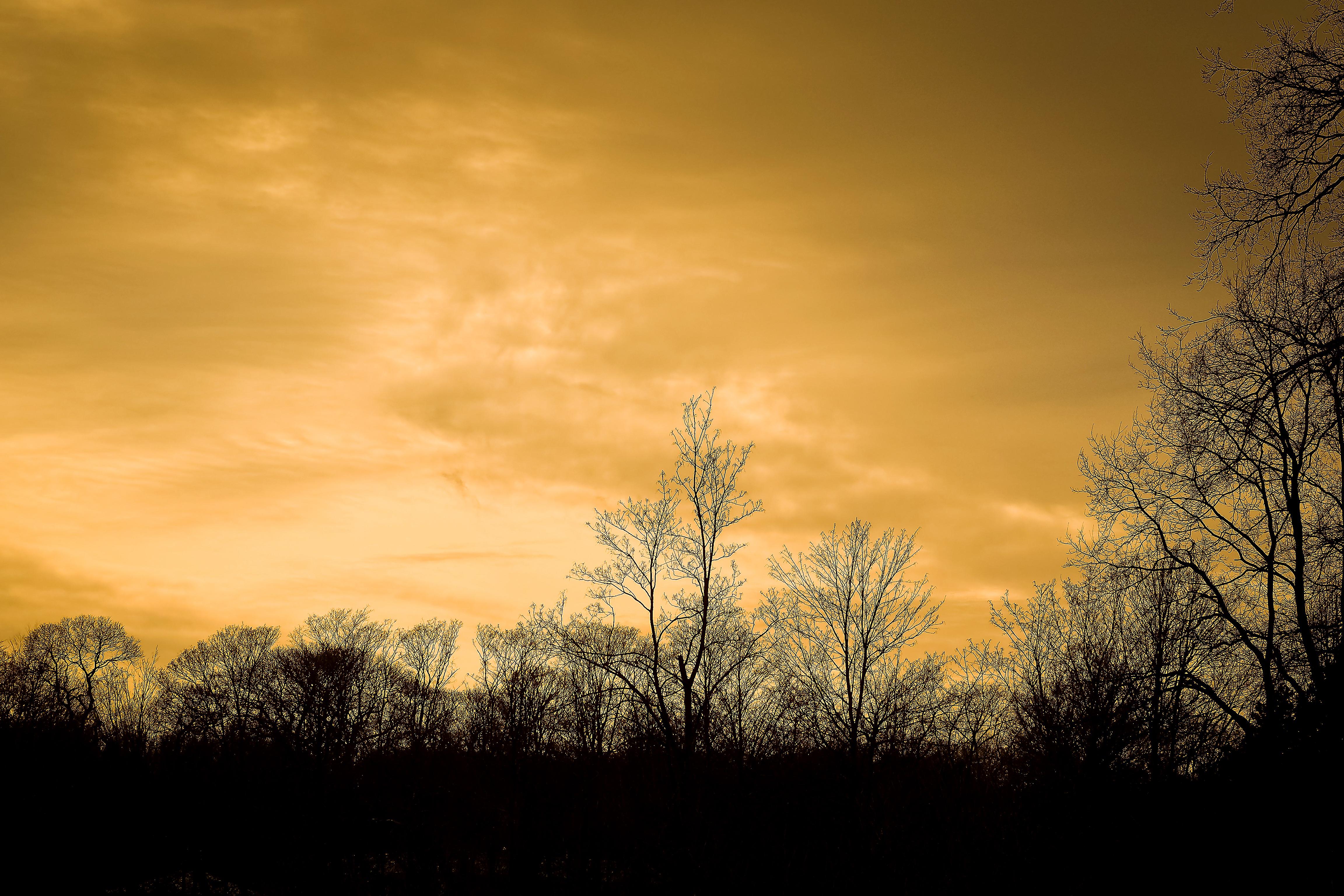Gratis Afbeeldingen : landschap, boom, natuur, Bos, tak, silhouet ...