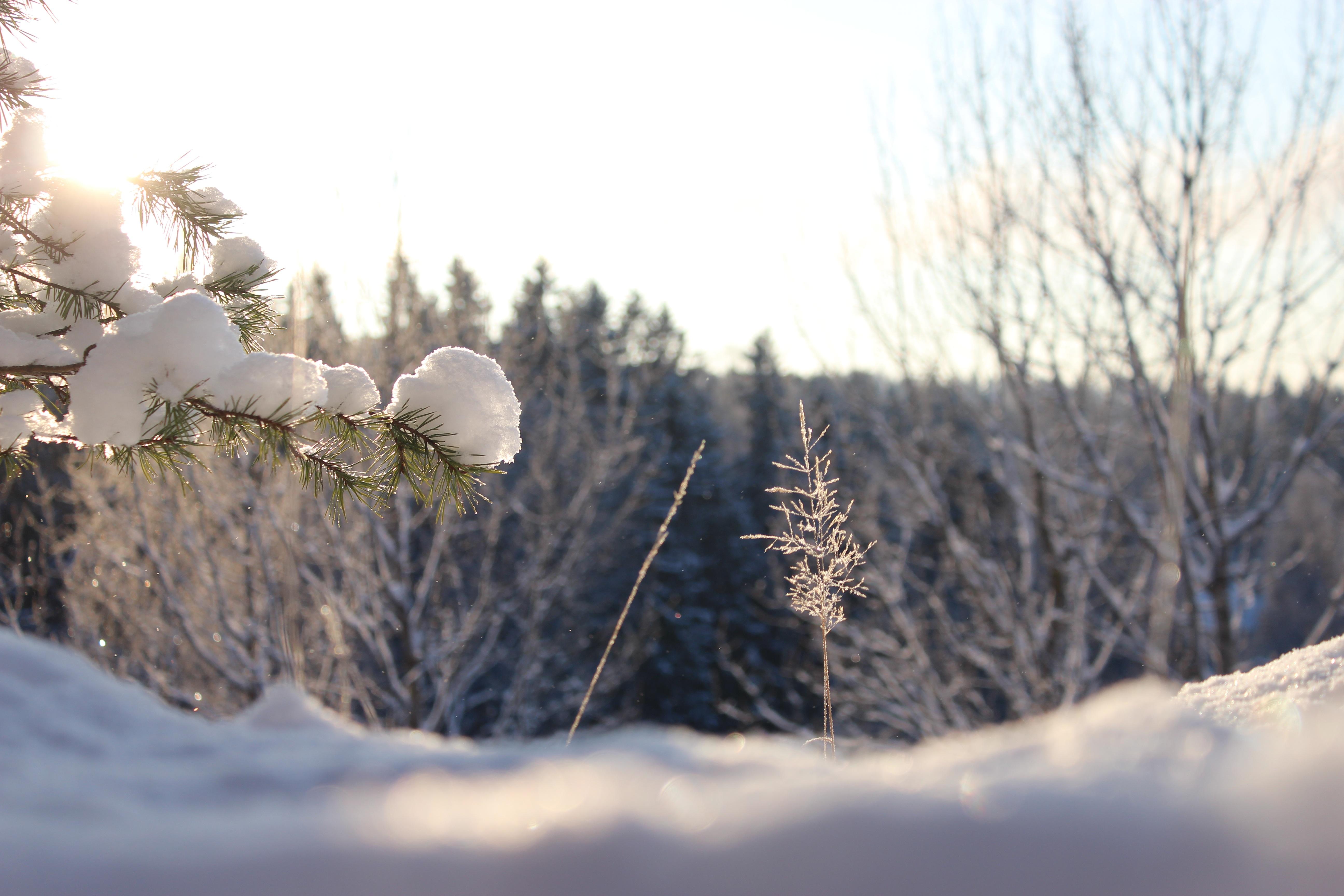 Landschaft Baum Natur Wald Ast Schnee Winter Himmel Sonnenschein Sonne Sonnenlicht Frost Wetter blau Terrain Tanne