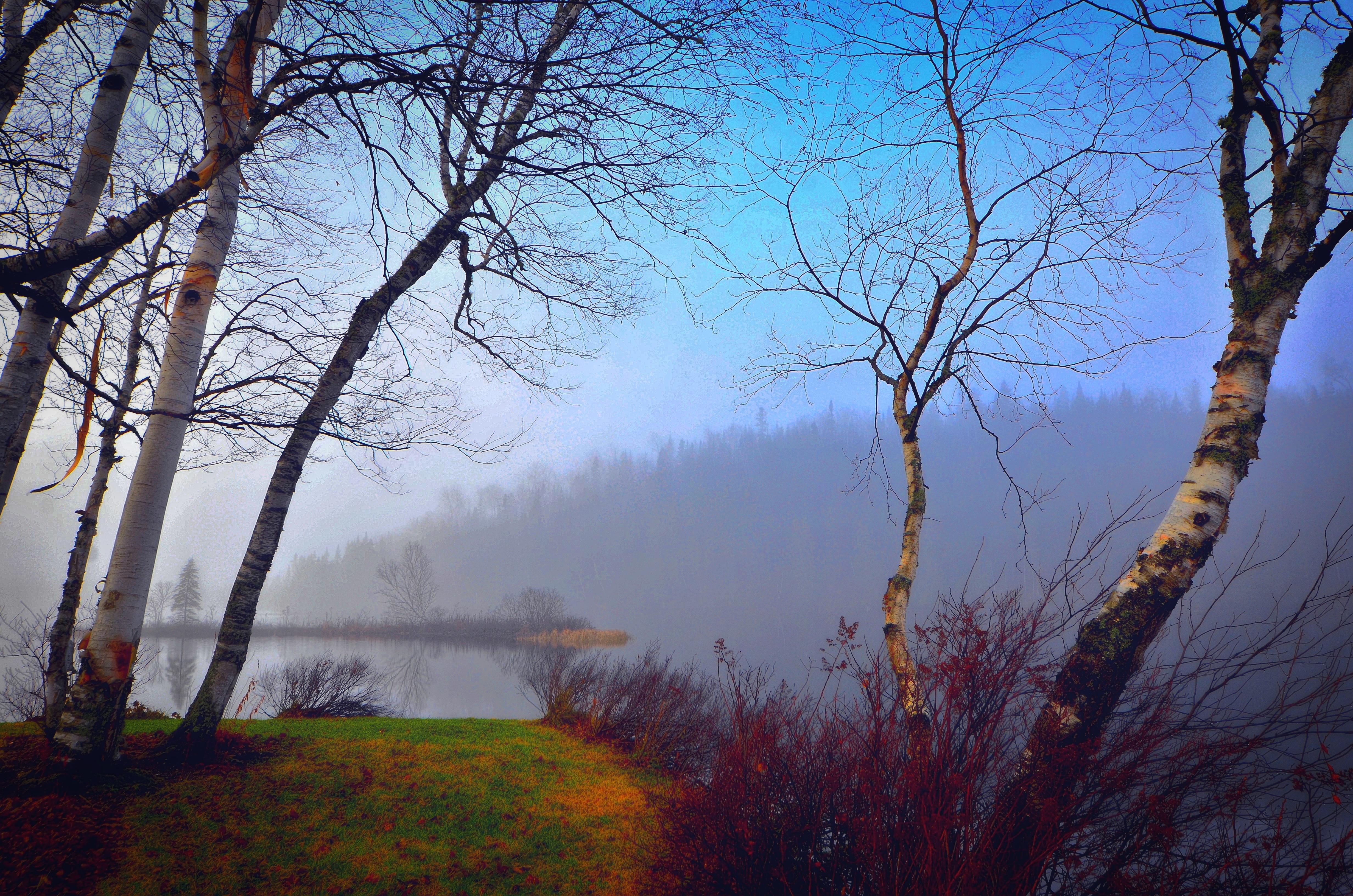Fotos gratis paisaje rbol naturaleza bosque rama for Arboles en invierno