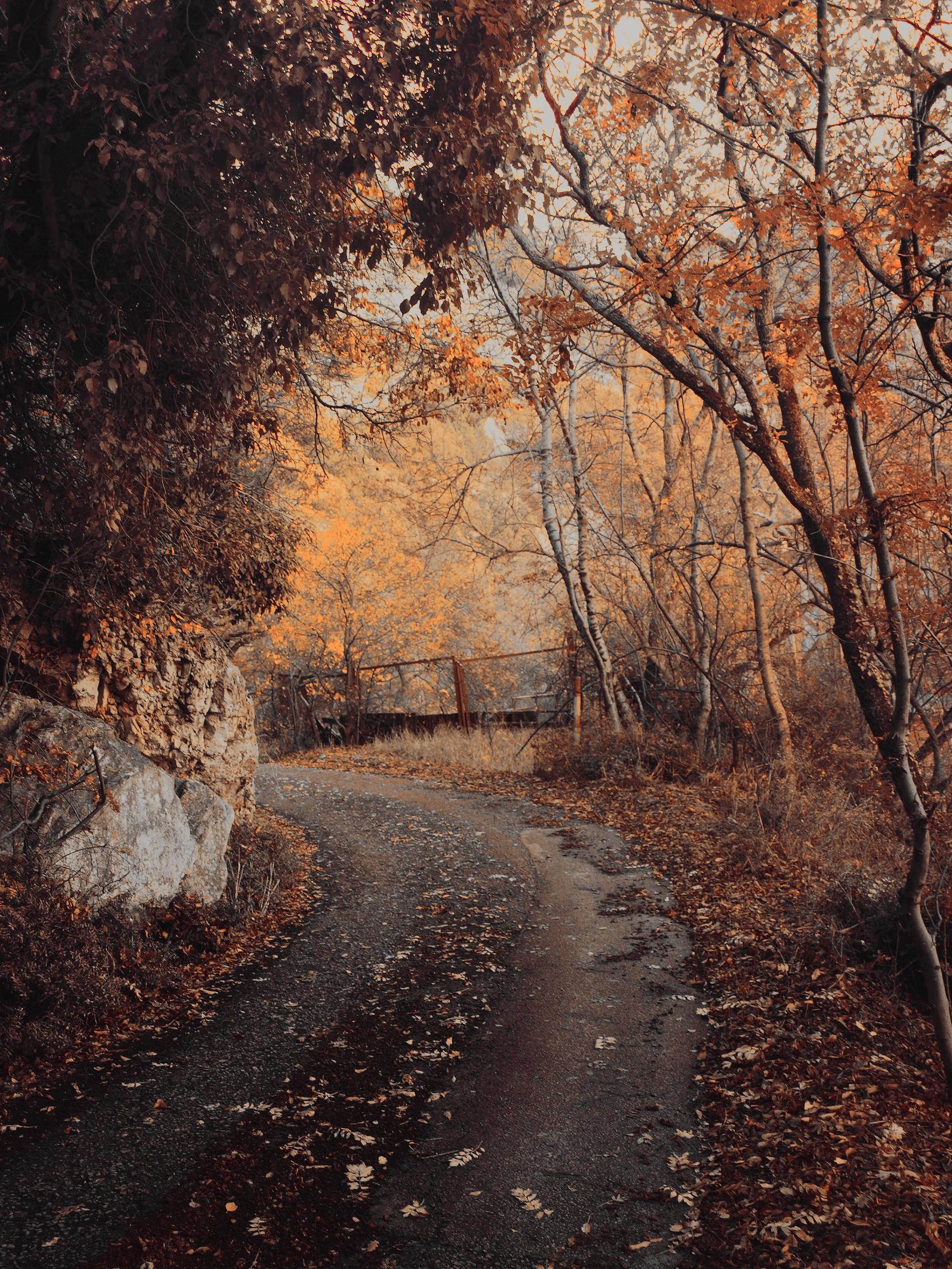 Картинки осень холодная