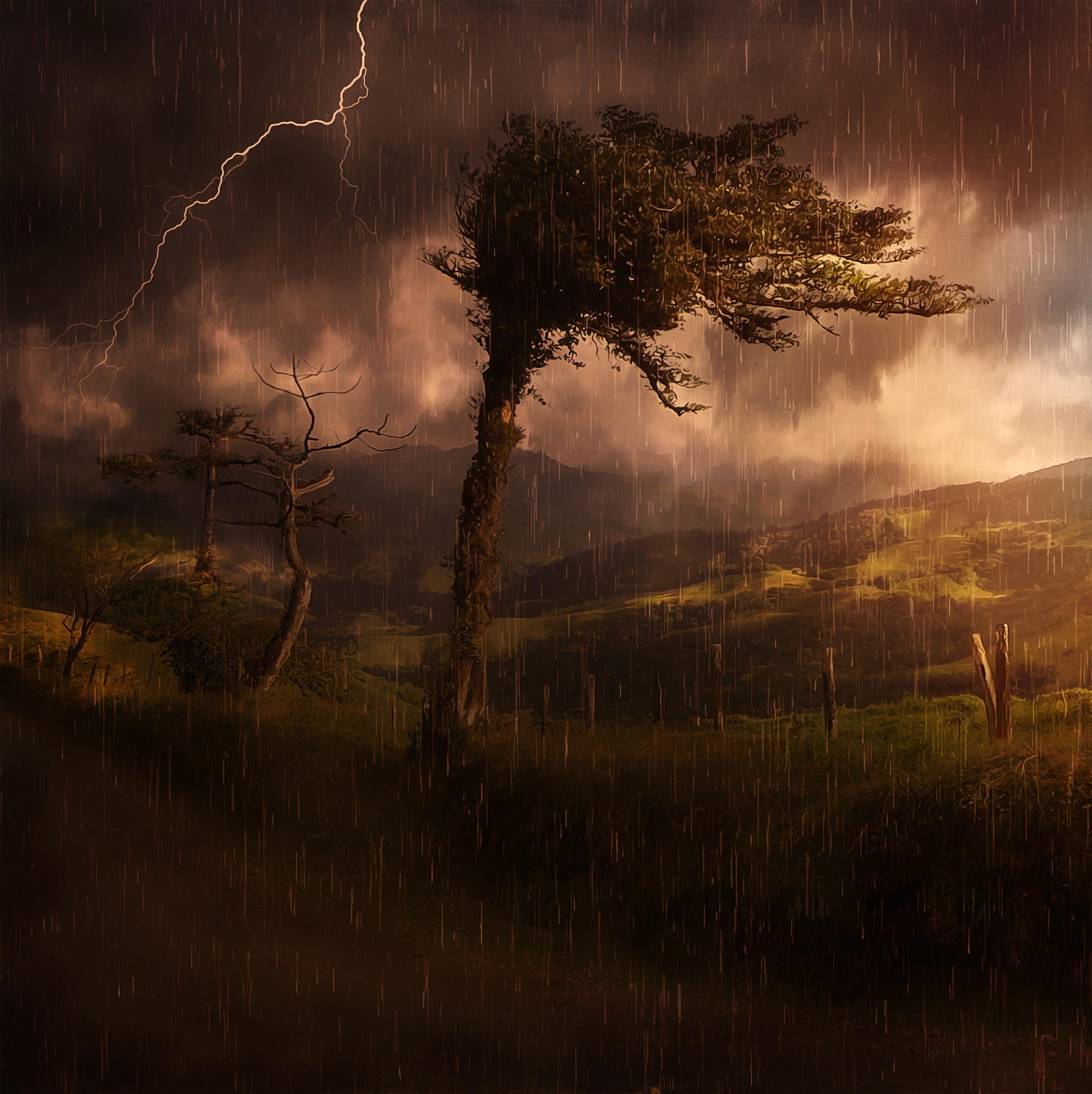Fotoğraf Peyzaj Ağaç Doğa Orman Bulut Sis Gündoğumu Gün
