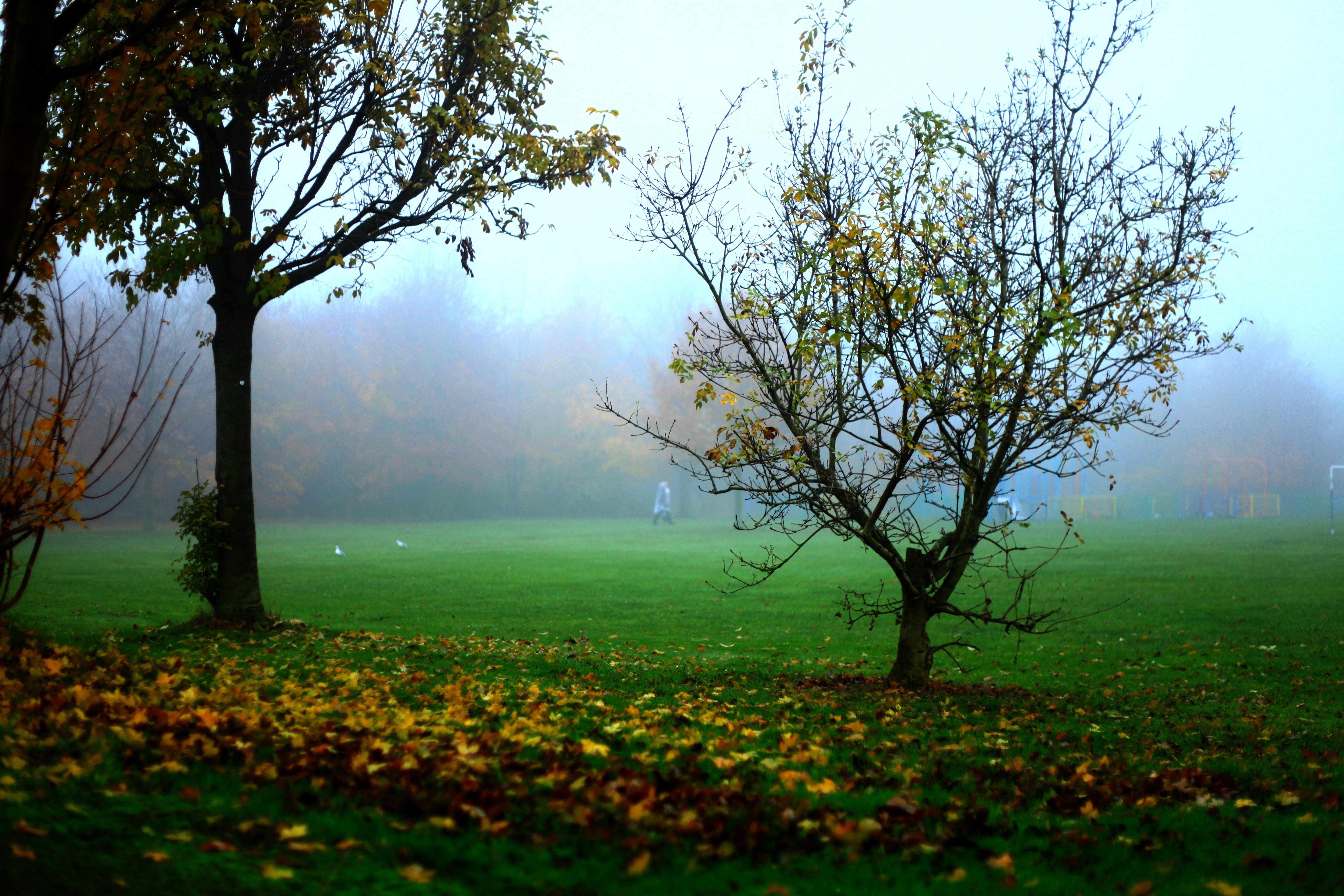 95 Gambar Alam Di Pagi Hari