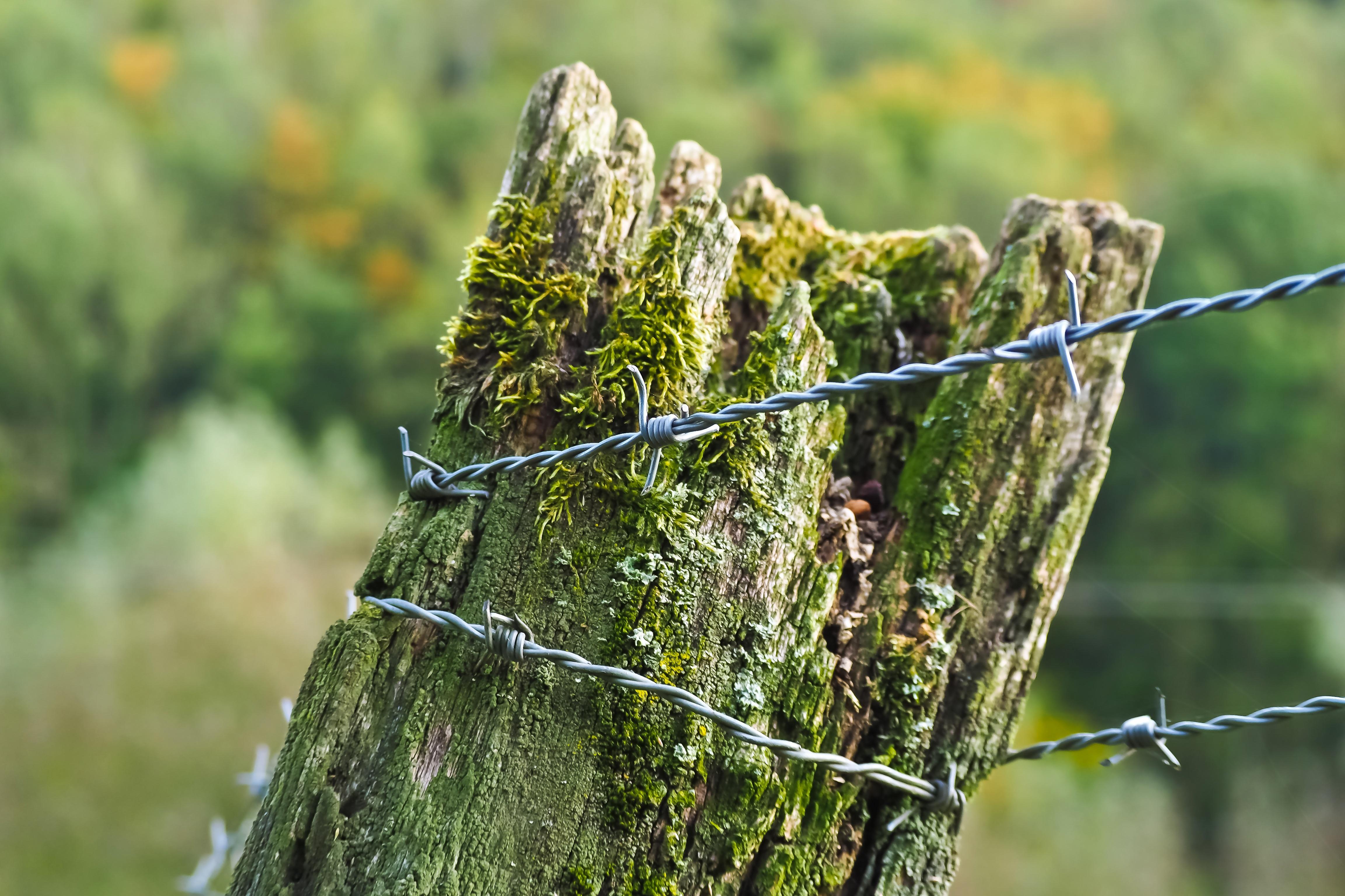 Kostenlose foto : Landschaft, Baum, Natur, Wald, Gras, Ast, Zaun ...