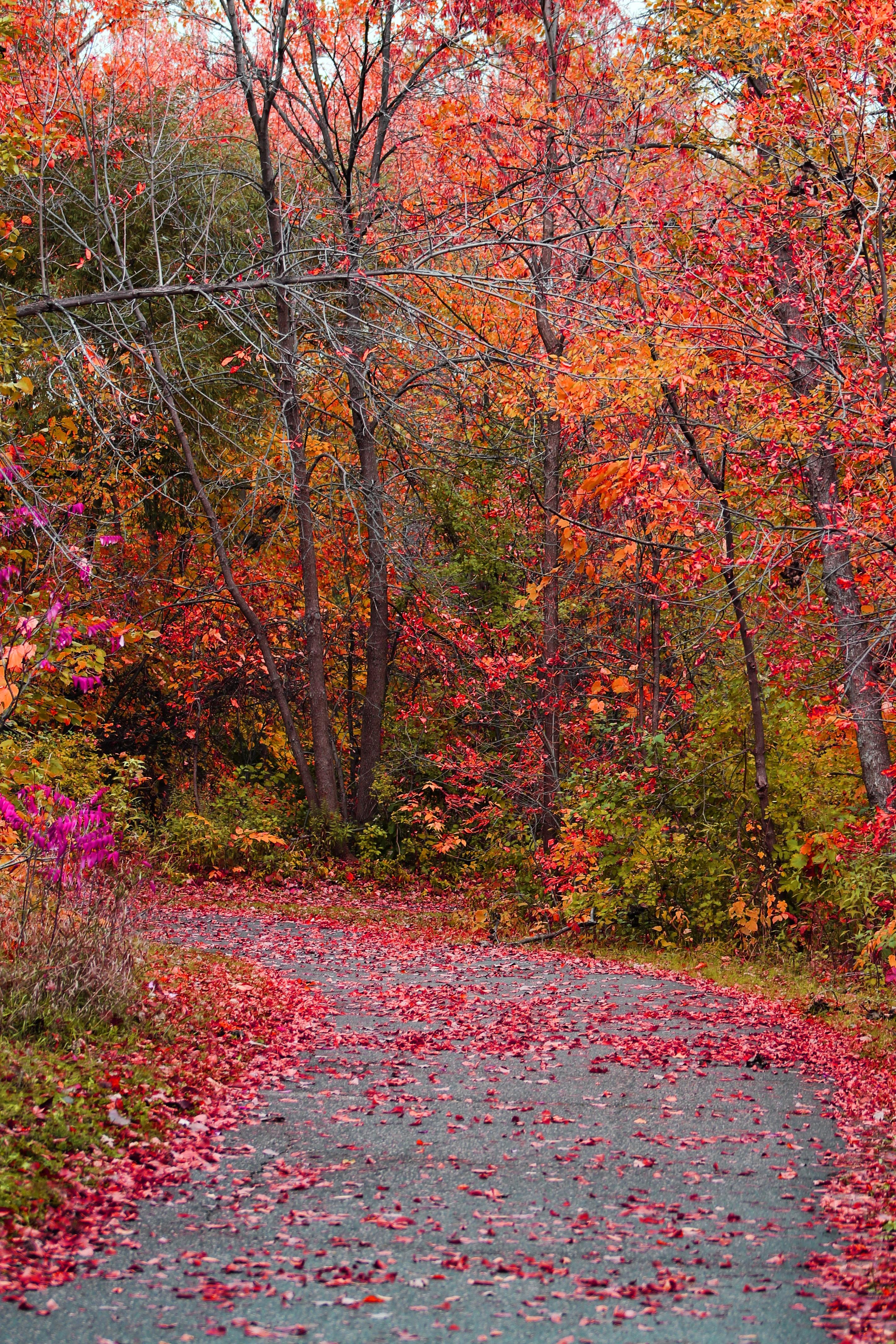 Fotos Gratis Paisaje Naturaleza Bosque C 233 Sped Rama